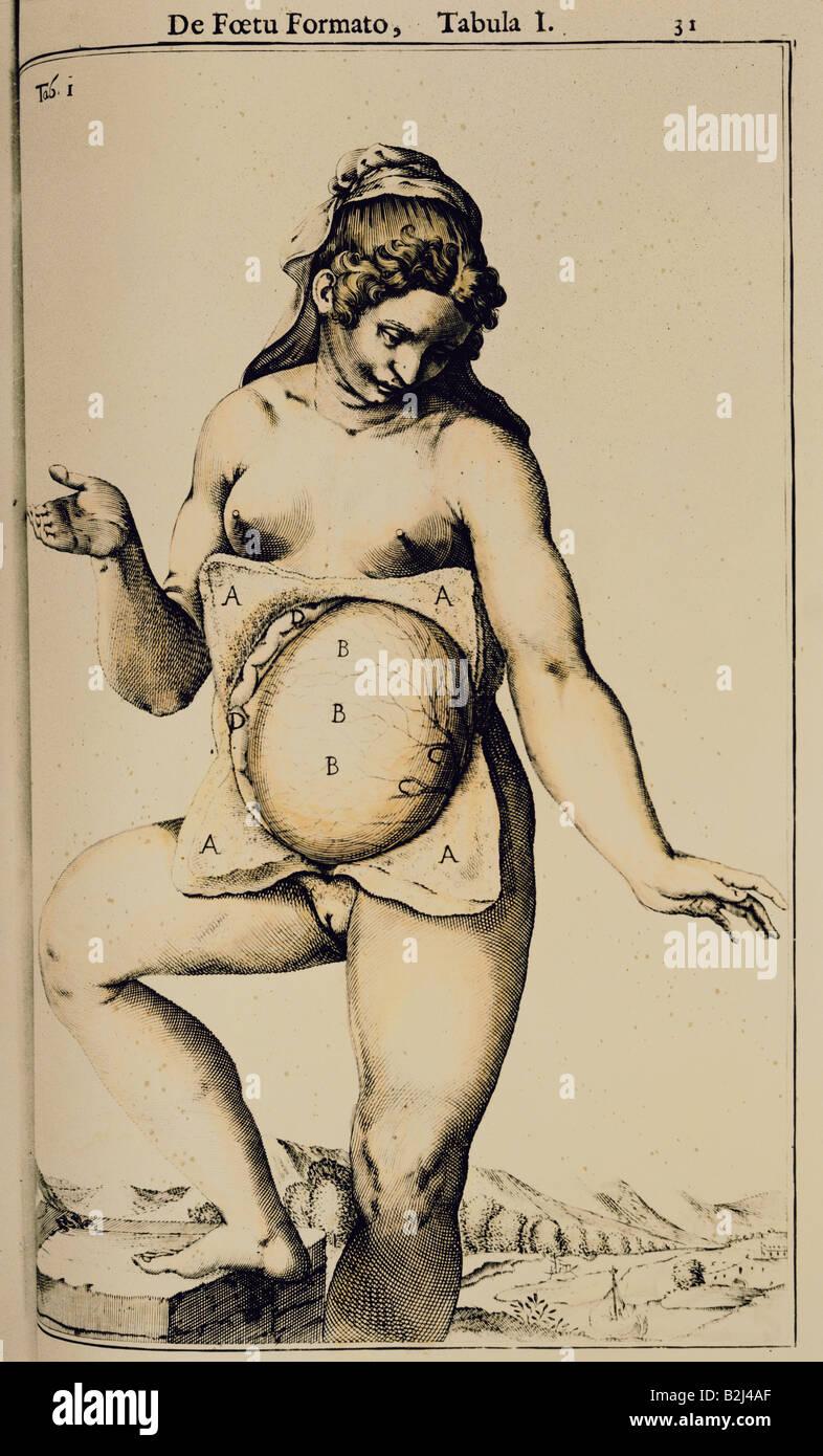 Medicina, anatomia, donna incinta con ventre aperto, xilografia, 'anatomia del corpo humano' da Juan de Immagini Stock