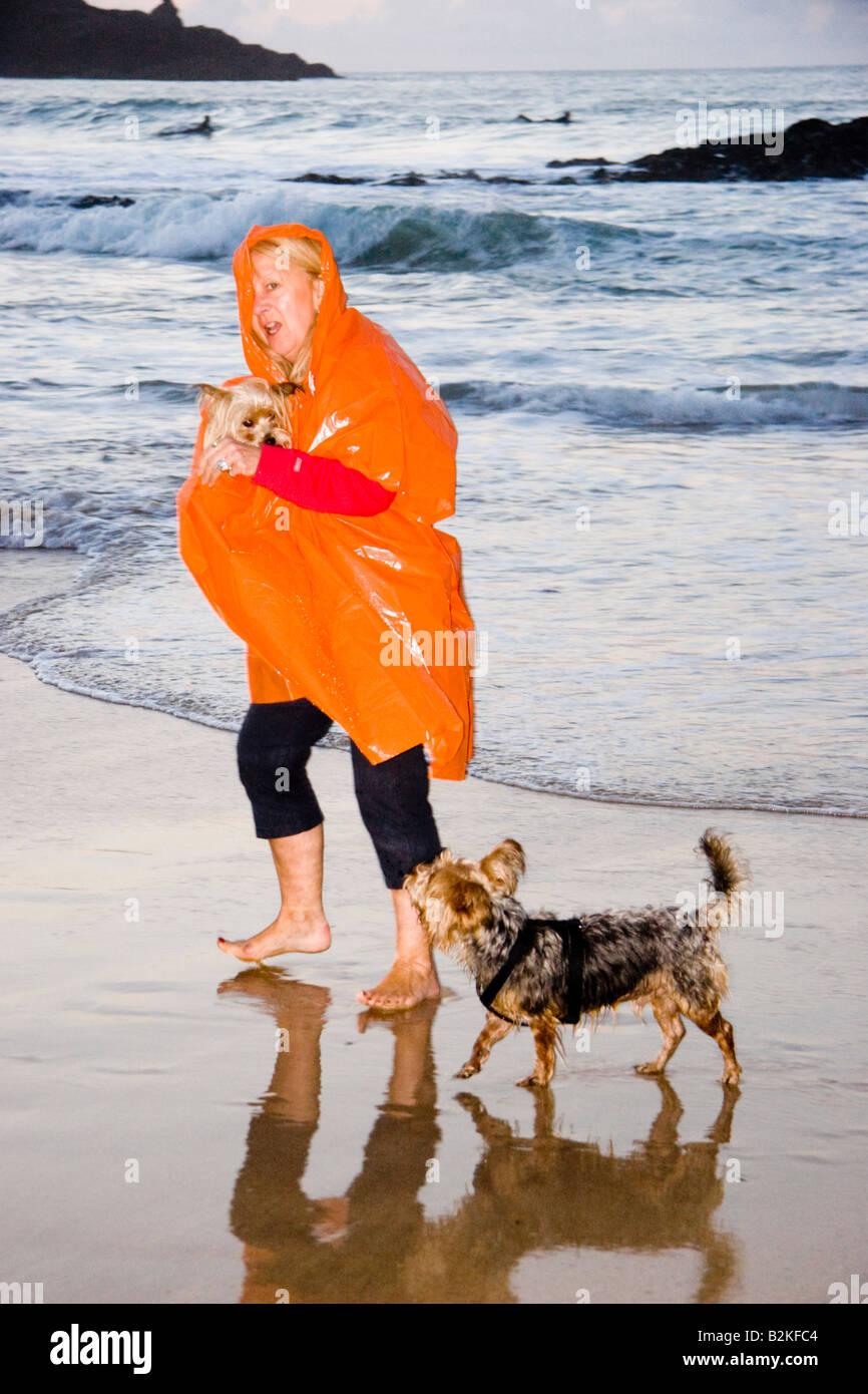 Donna matura indossando un arancio kagool camminare i suoi due Yorkshire Terrier cani lungo il litorale di Harlyn Immagini Stock