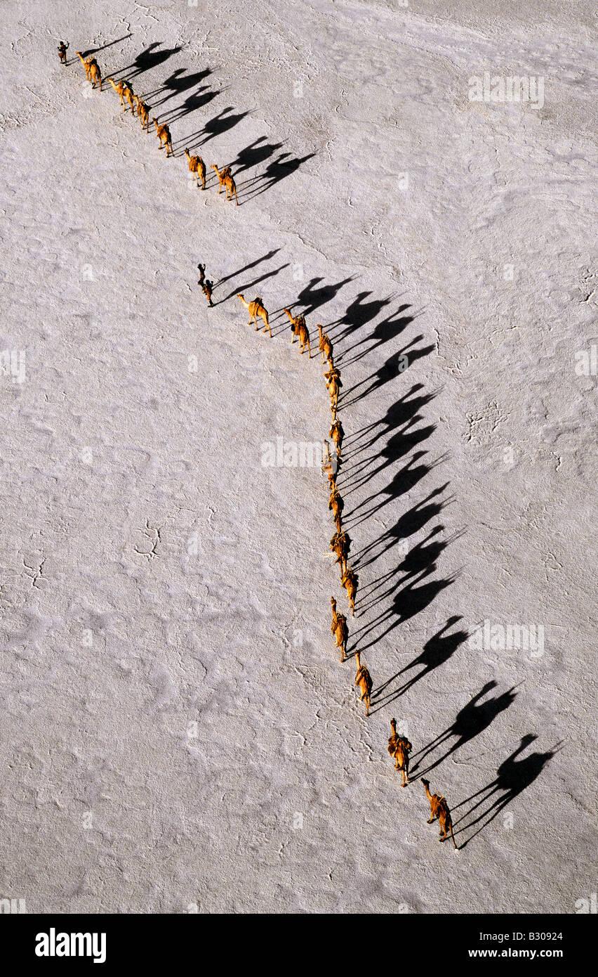 Gibuti, il Lago Assal. Un cammello Afar caravan attraversando le saline di Lago Assal, come ombre allungare nel Immagini Stock