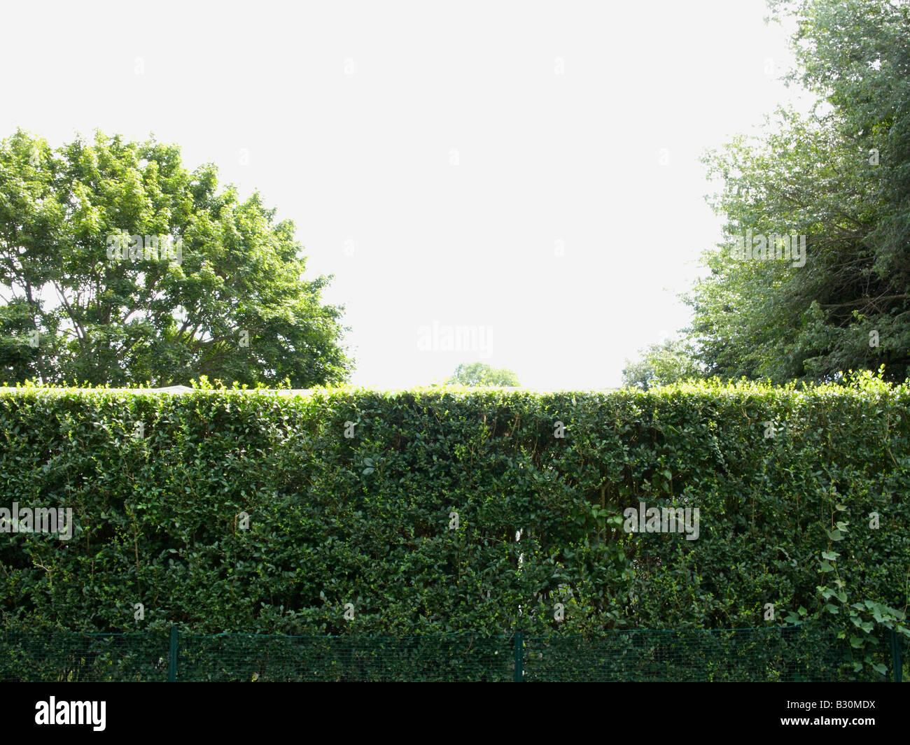 Hedgerow Immagini Stock