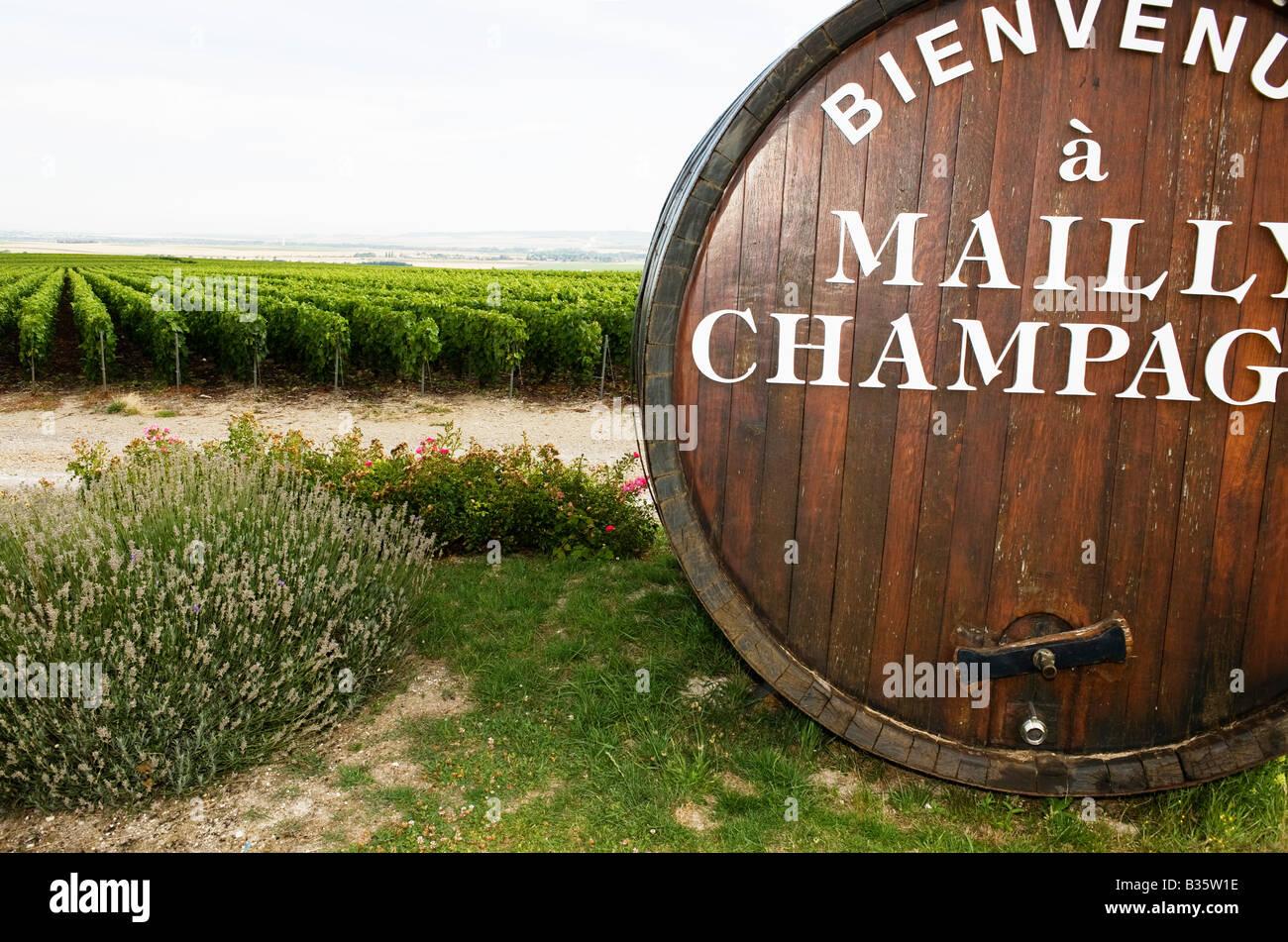 Mailly champagne vigneto Montagne de Reims Francia Immagini Stock