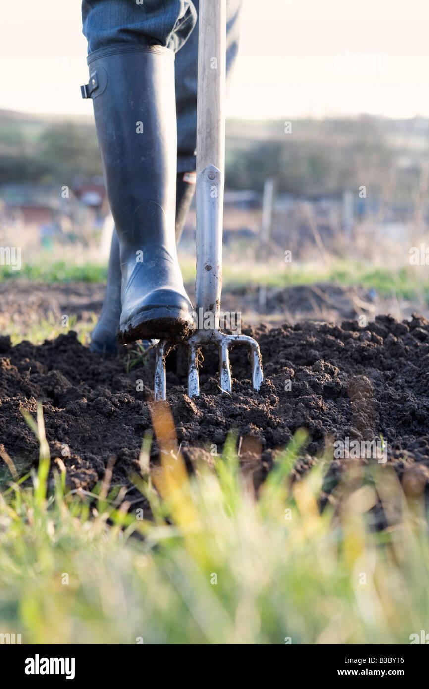 Una persona giardinaggio, terra di scavo con una forcella Immagini Stock