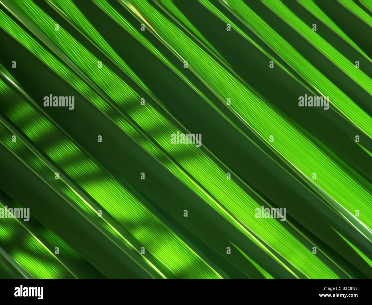Verde di foglie di palma foglie fresche tonalità di luce verde di piante esotiche, verde palm, foglie, sfondo, Immagini Stock