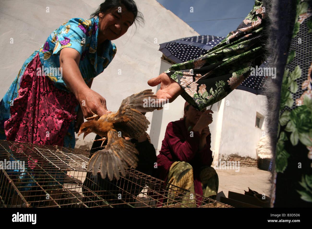 Mercato di pollame in Urgench, Uzbekistan Immagini Stock