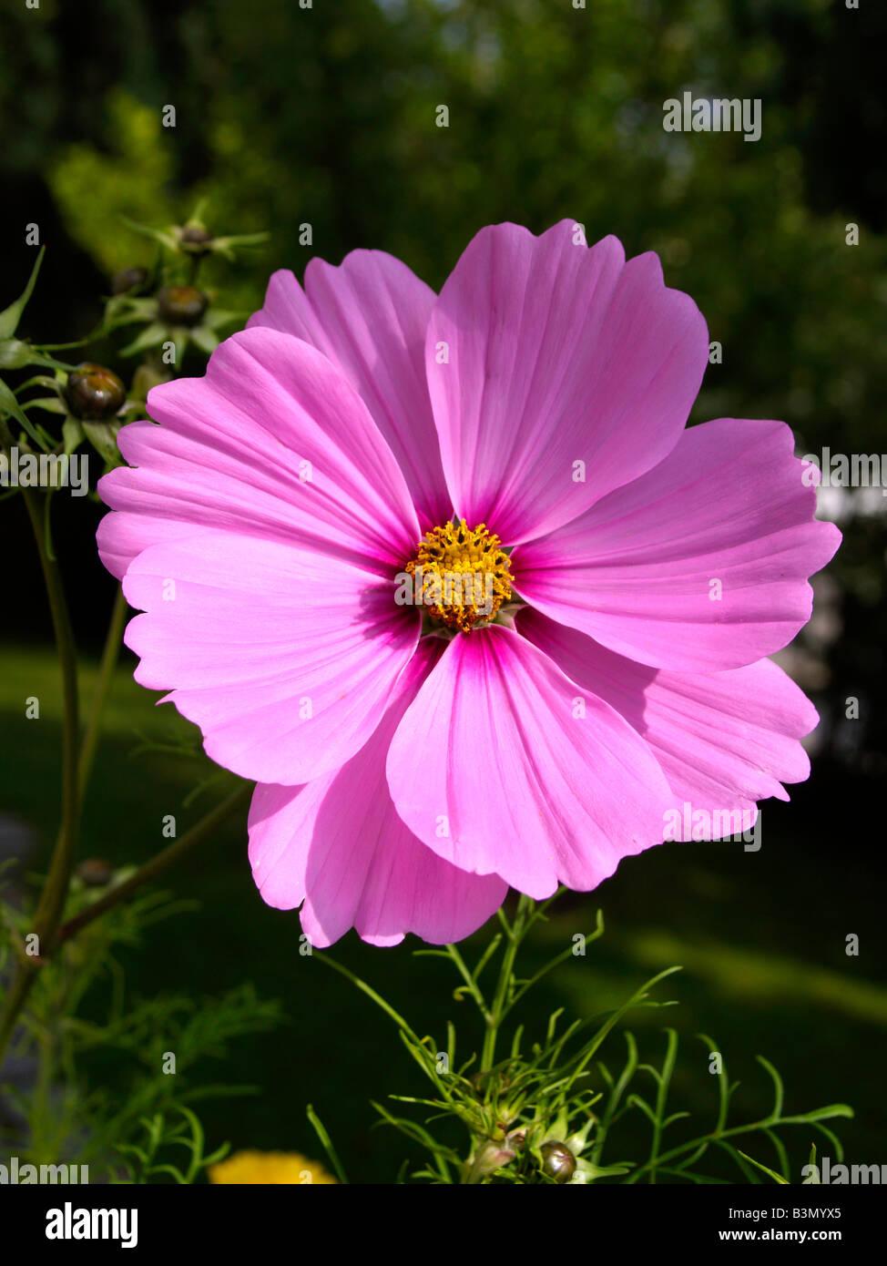 Schnittblumen Immagini Schnittblumen Fotos Stock Alamy