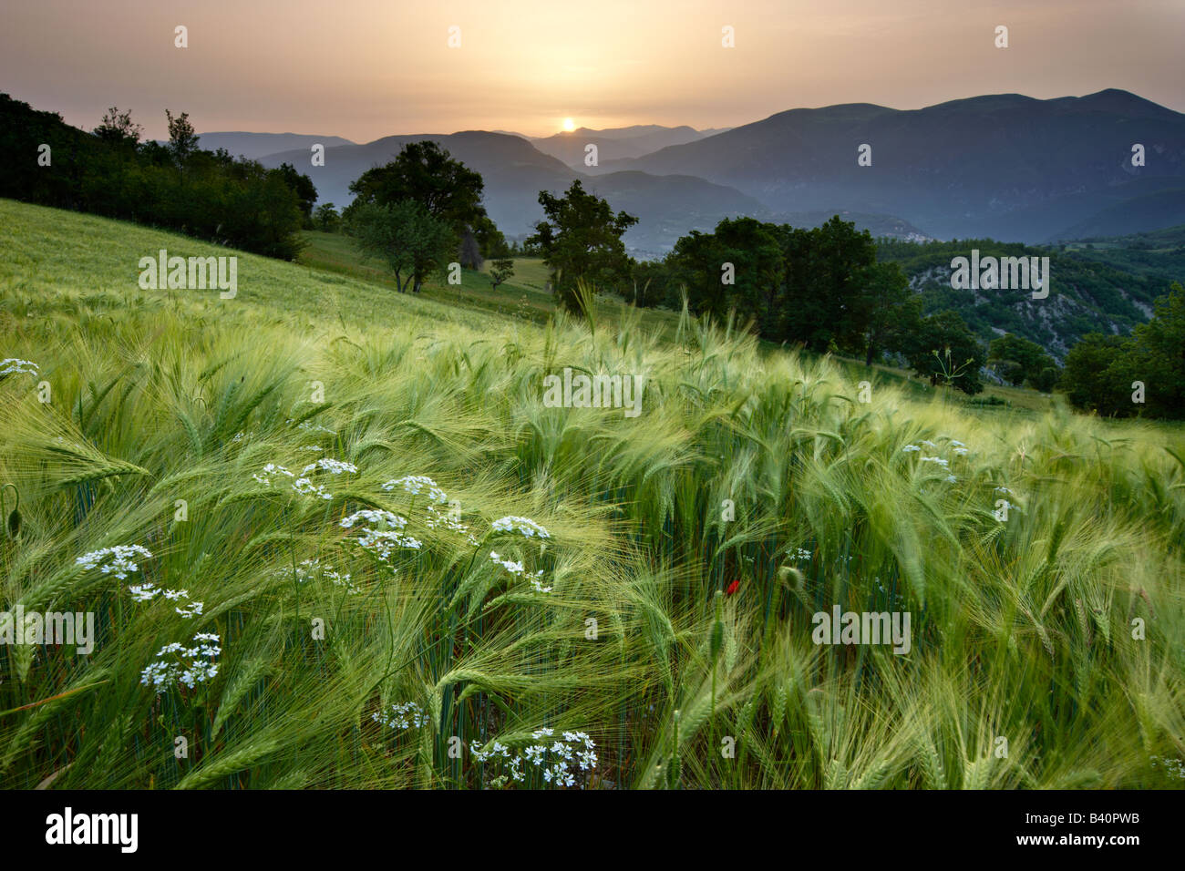 Alba in un campo di orzo che si affaccia sulla Valnerina vicino a Meggiano, Umbria, Italia Foto Stock