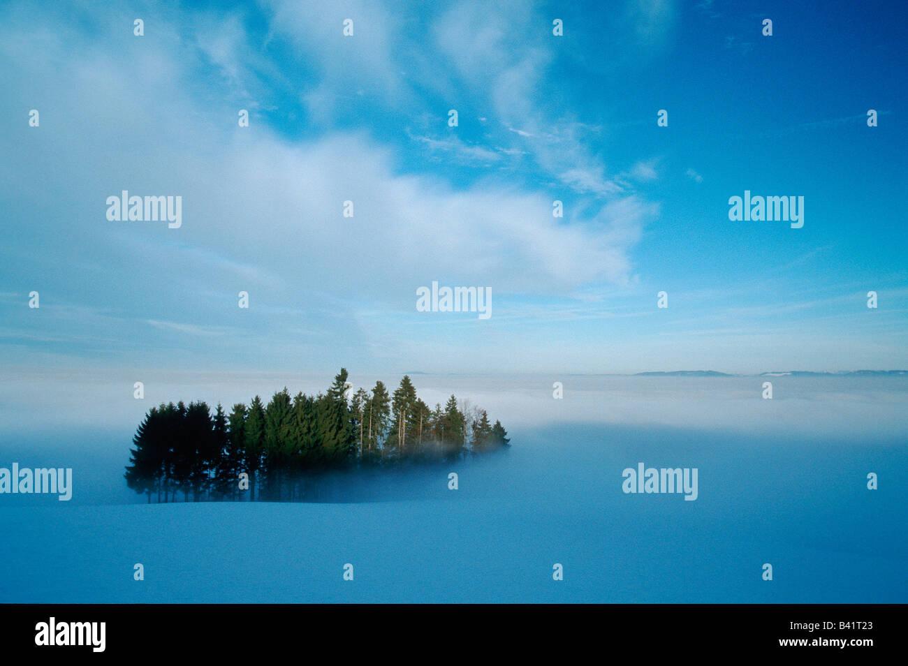 Boschi in inverno la nebbia shredded in Svizzera Immagini Stock