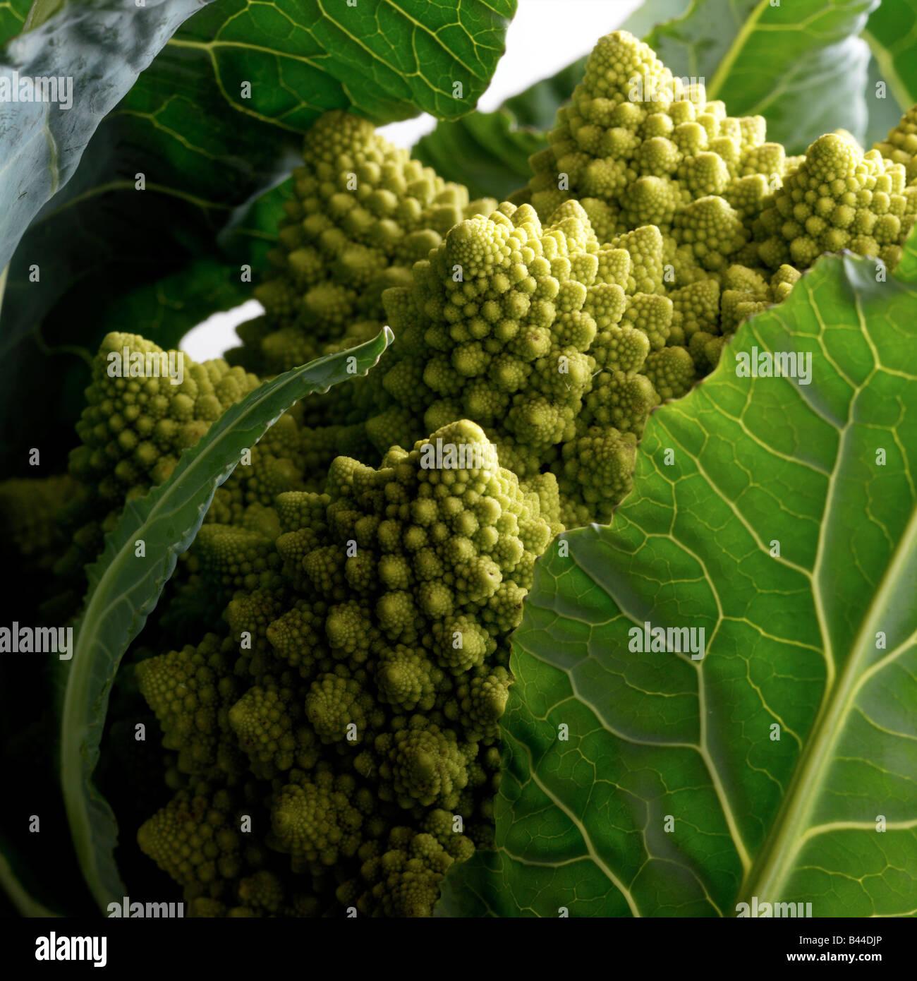 Cavolo broccolo Romanesco Immagini Stock