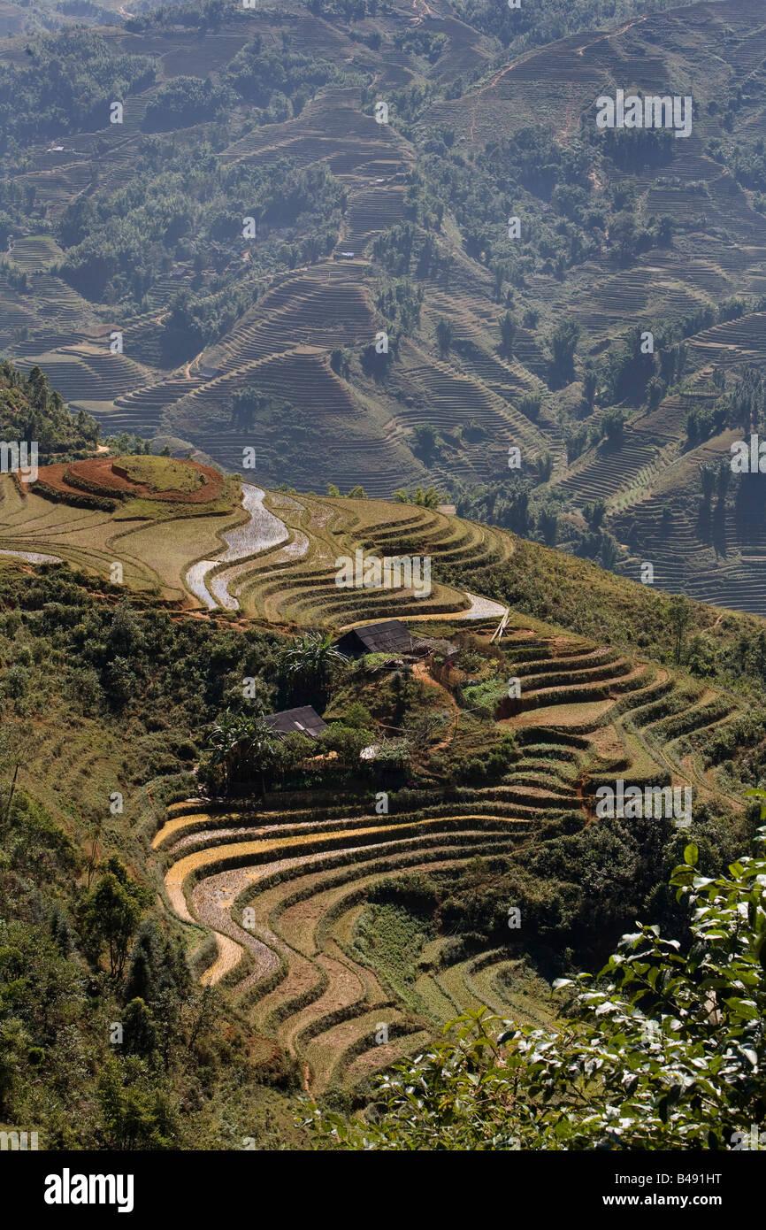 Risaie a terrazze al di fuori del villaggio di Sapa, Vietnam Immagini Stock