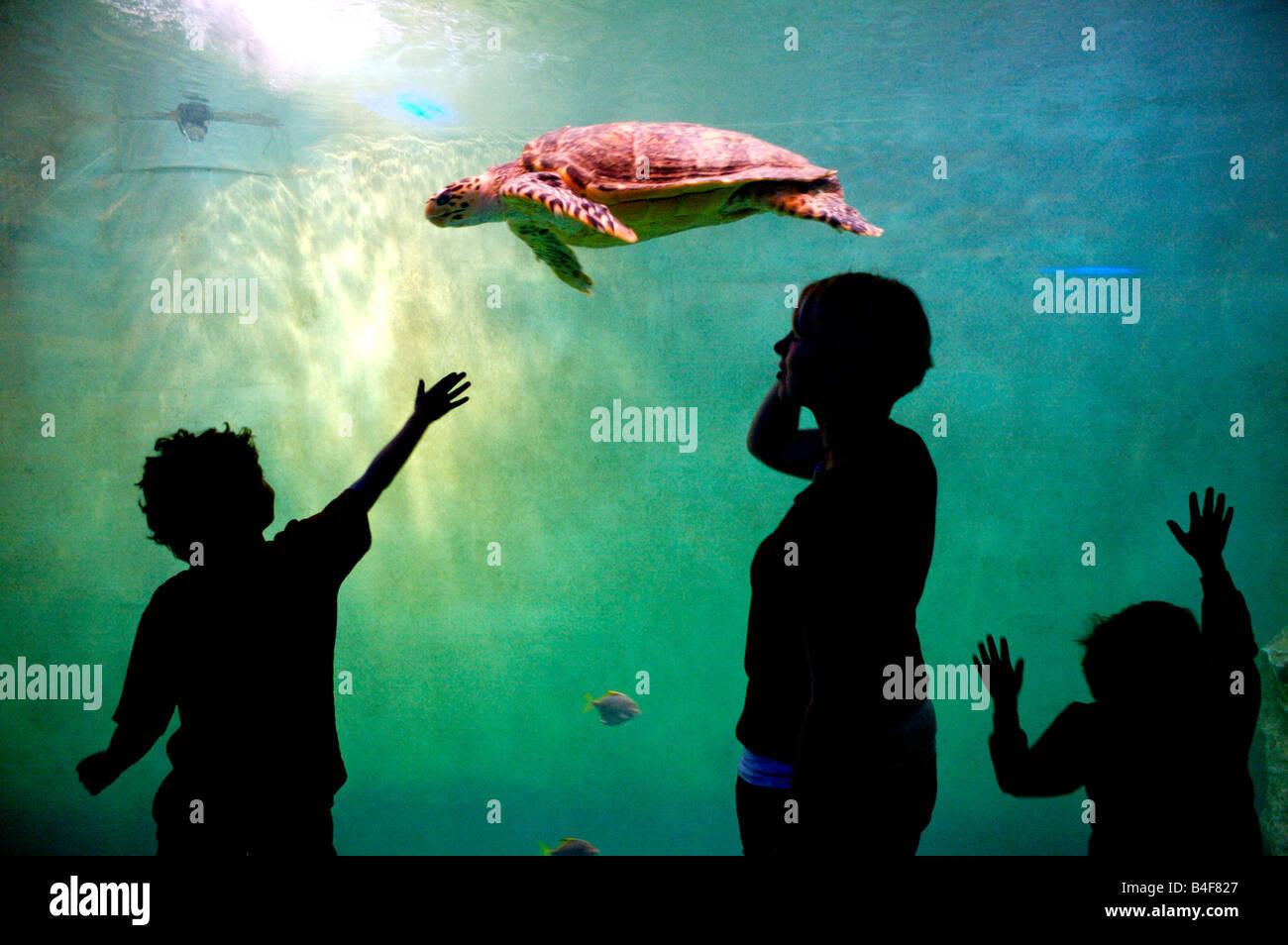 I bambini a guardare una tartaruga di nuotare in un acquario, Francia Foto Stock