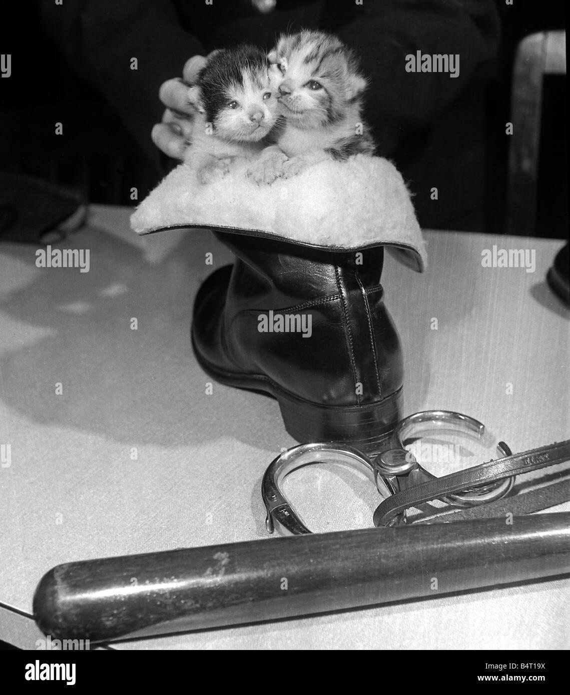 Un Gatto Randagio Che Entrato Nella Sede Della Polizia Di Newcastle