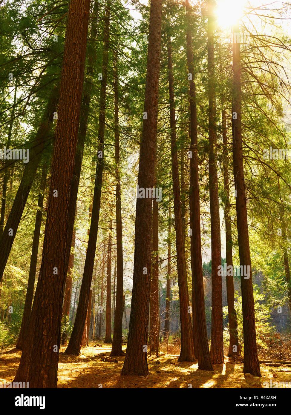 Tranquilla scena di foresta Immagini Stock