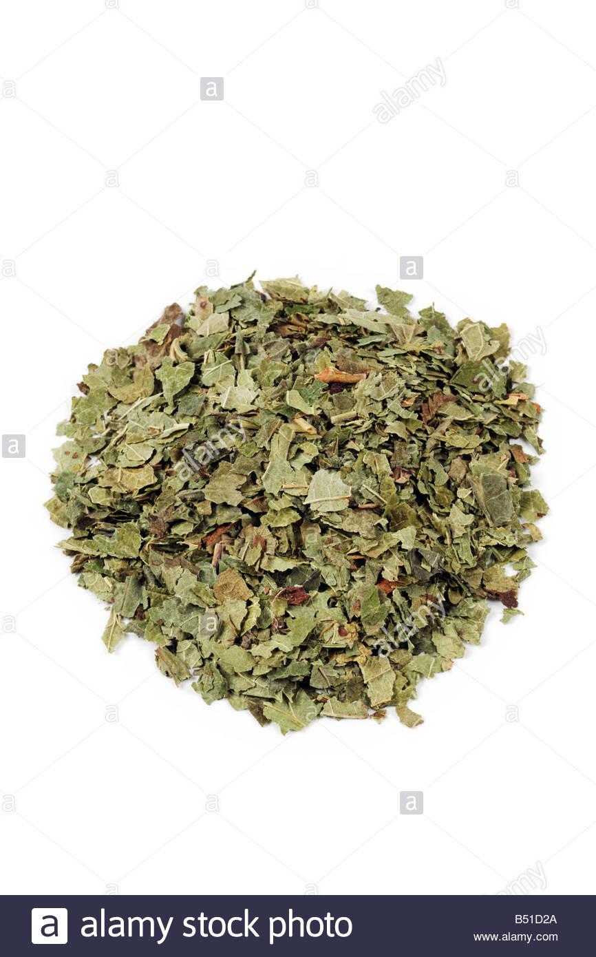 Ribes nigrum - secchi di foglie di ribes nero Foto Stock