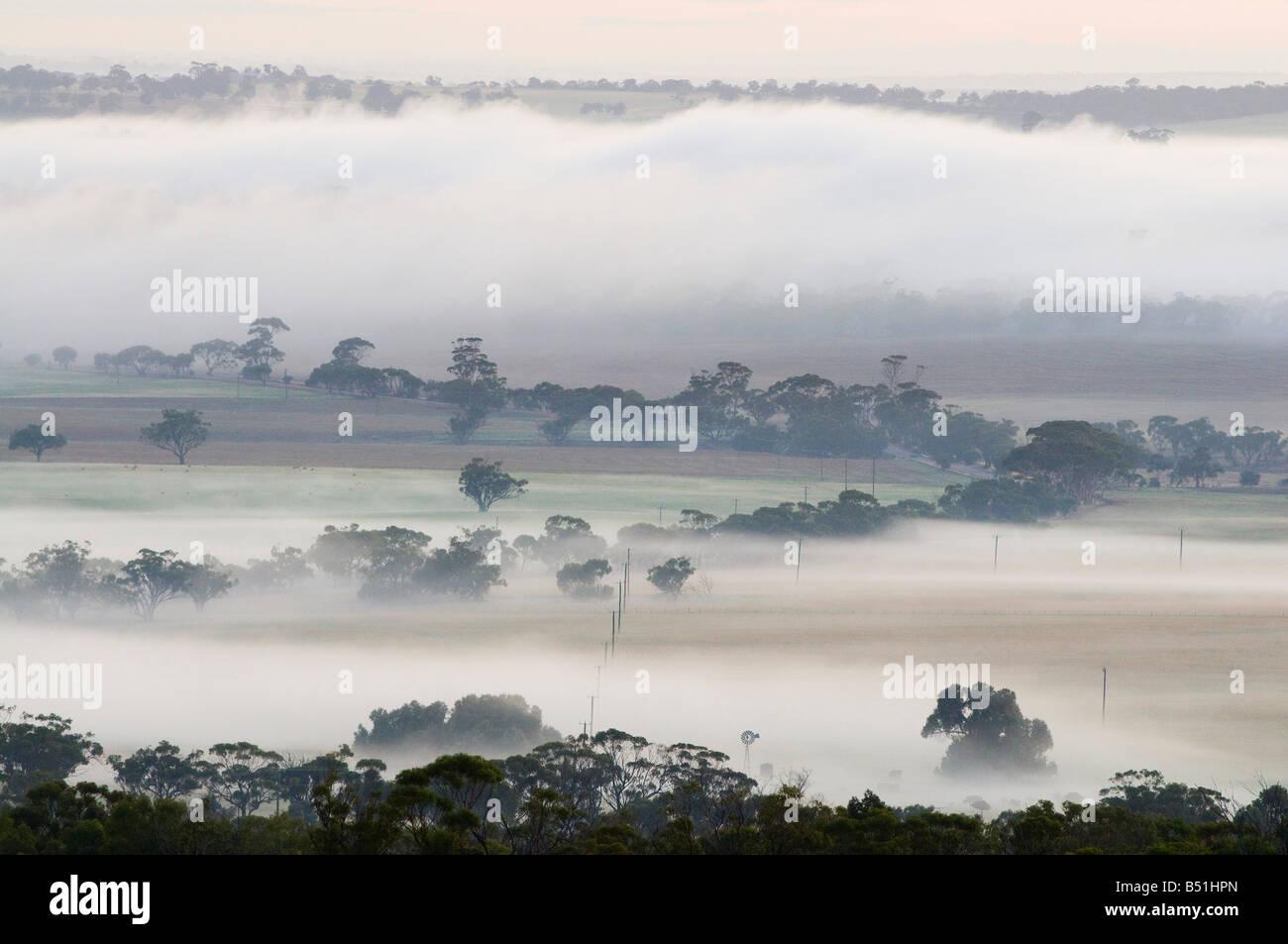 Mattina, Valle di Avon, York, Australia occidentale, Australia Foto Stock