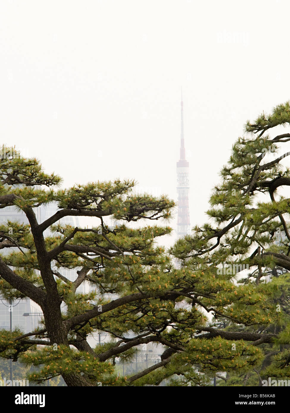 Alberi e la torre di Tokyo Foto Stock