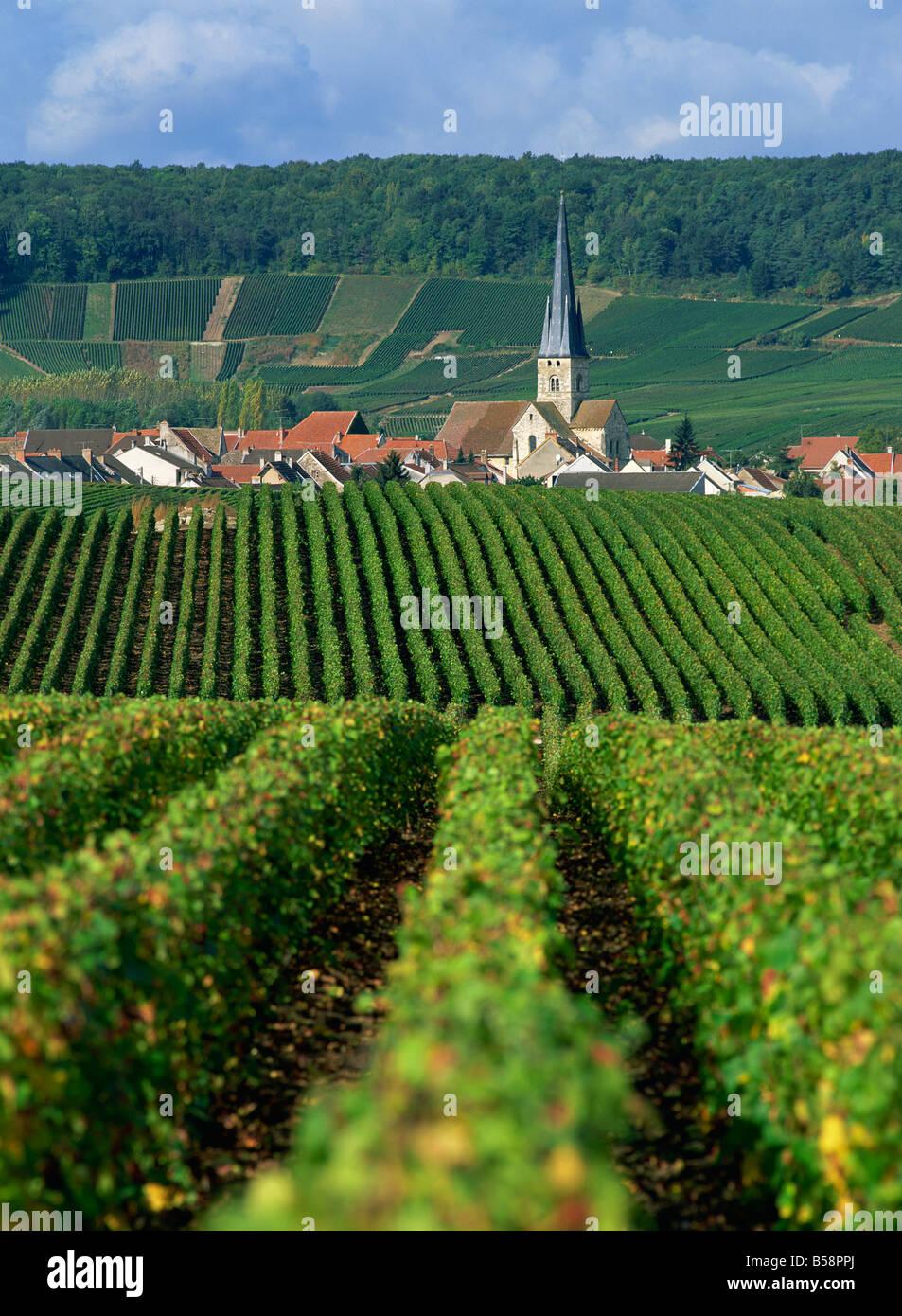 Chamery, Montagne de Reims, Champagne, Francia, Europa Immagini Stock