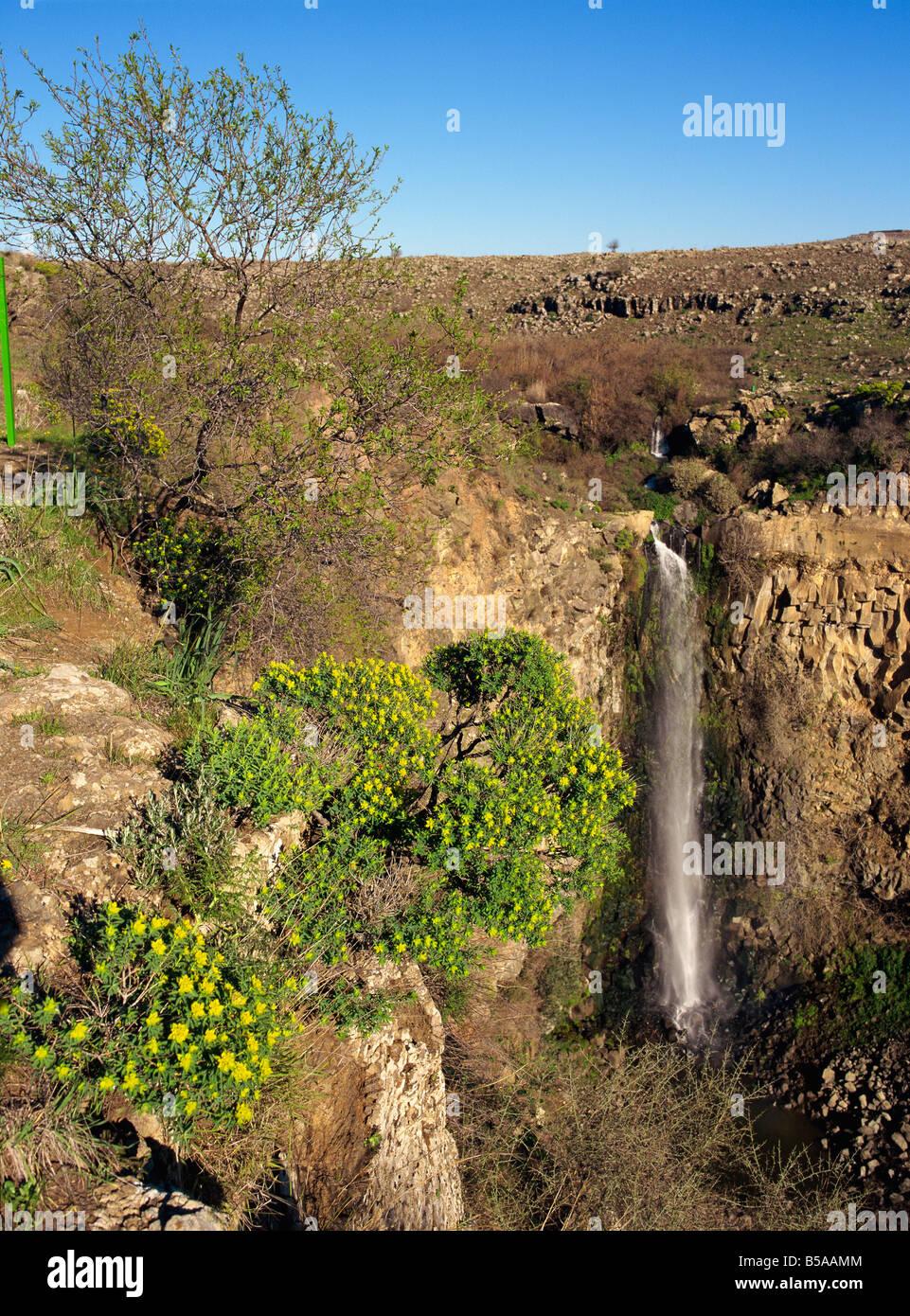Fiori Selvatici e la cascata nel Gamla Riserva naturale sulle alture del Golan, Israele, Medio Oriente Immagini Stock