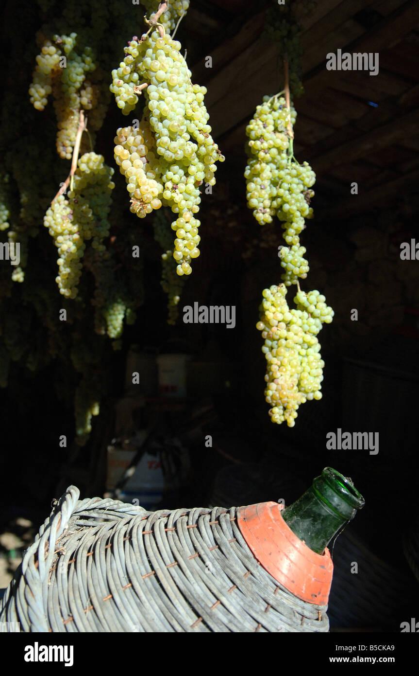 Kendte Appassimento uve per la produzione del vin santo vino Foto WN-86
