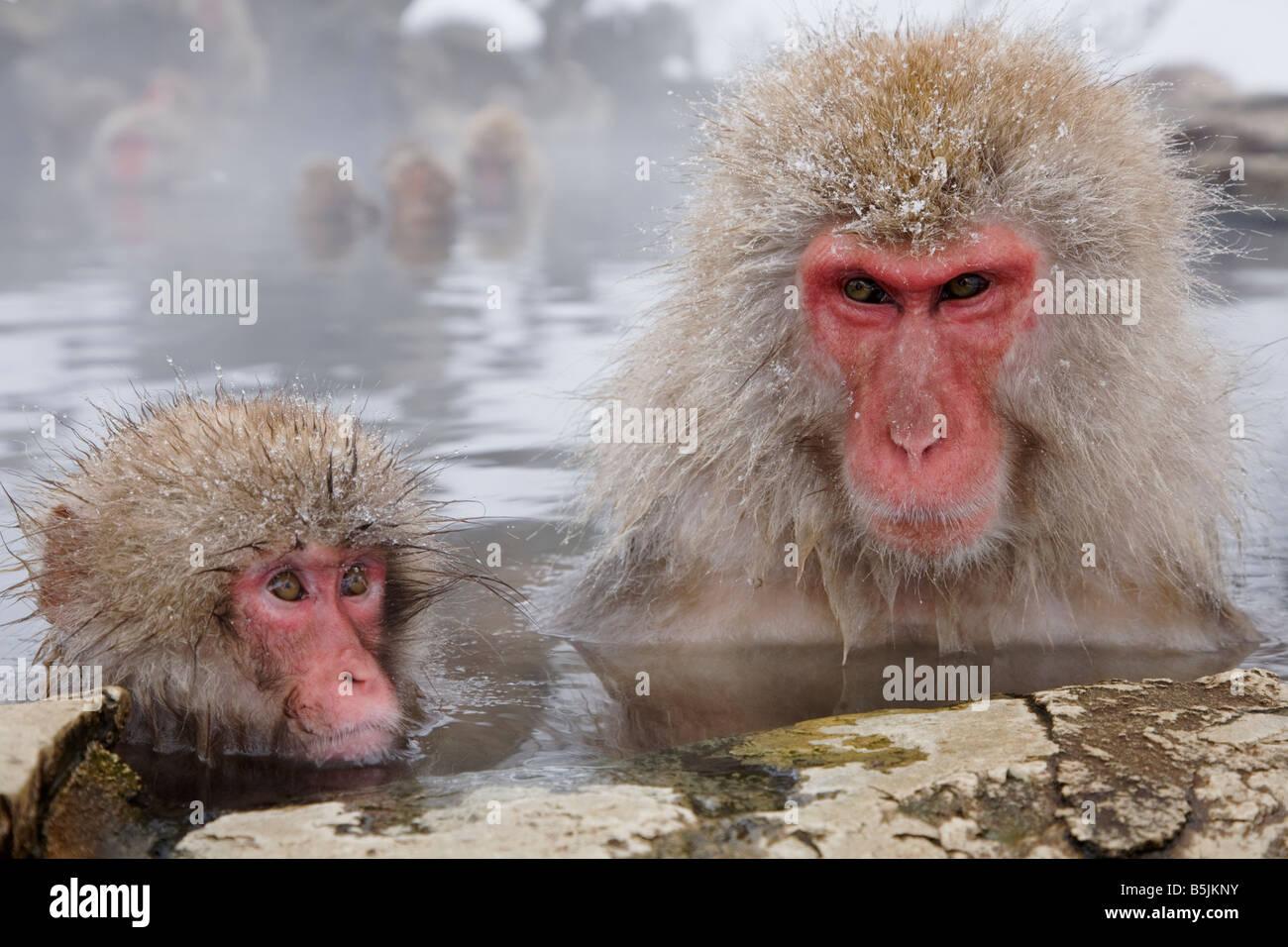 Neve scimmie in Nazionale di Jigokudani Monkey Park Nagano Giappone Immagini Stock