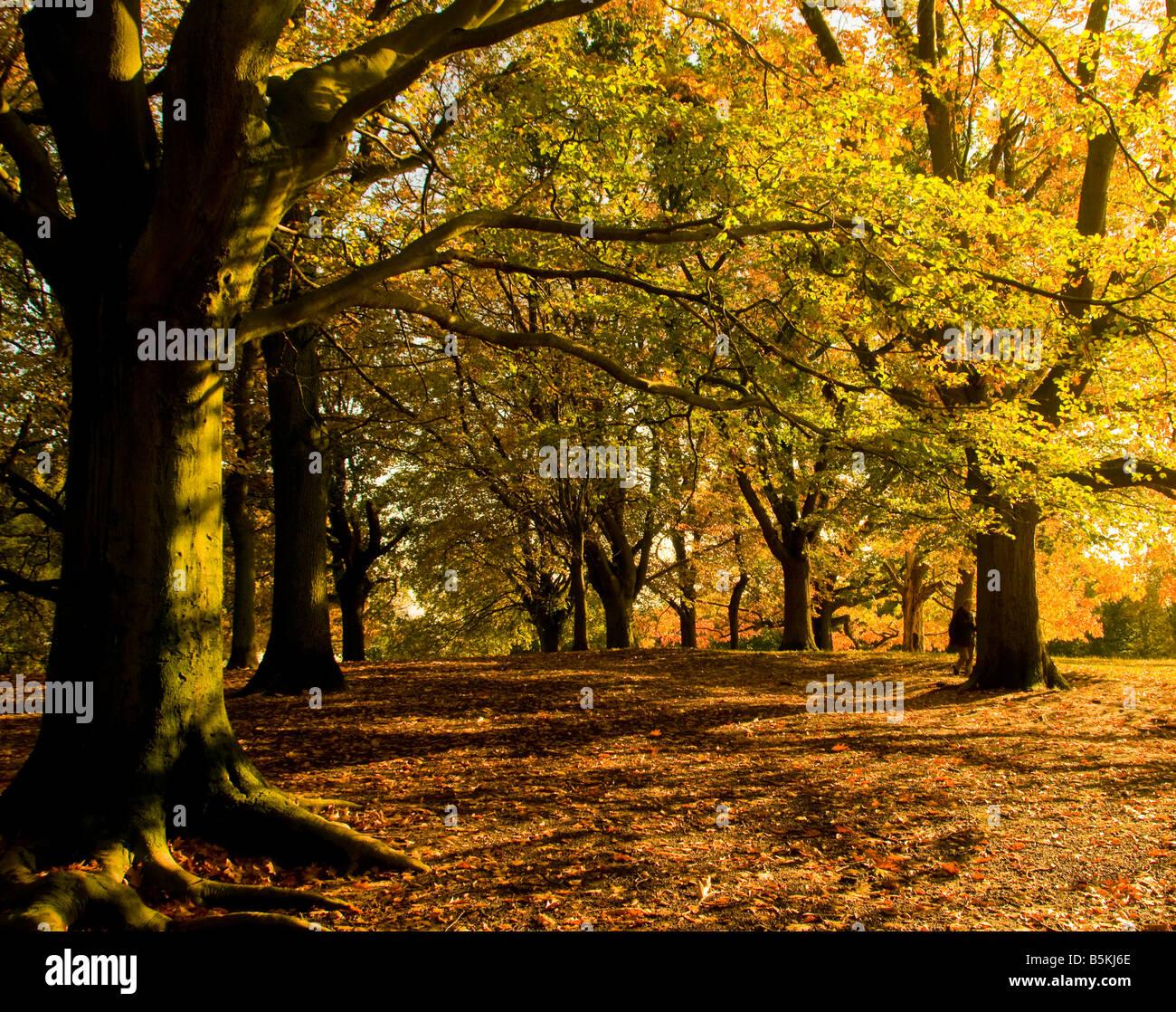 Gli alberi su una soleggiata giornata autunnale in Gran Bretagna Immagini Stock