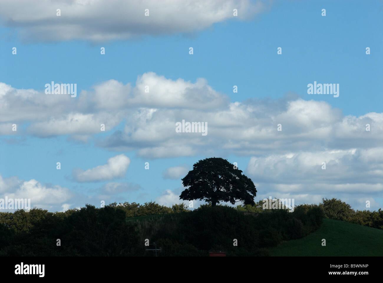 Siluetta dell'albero Foto Stock