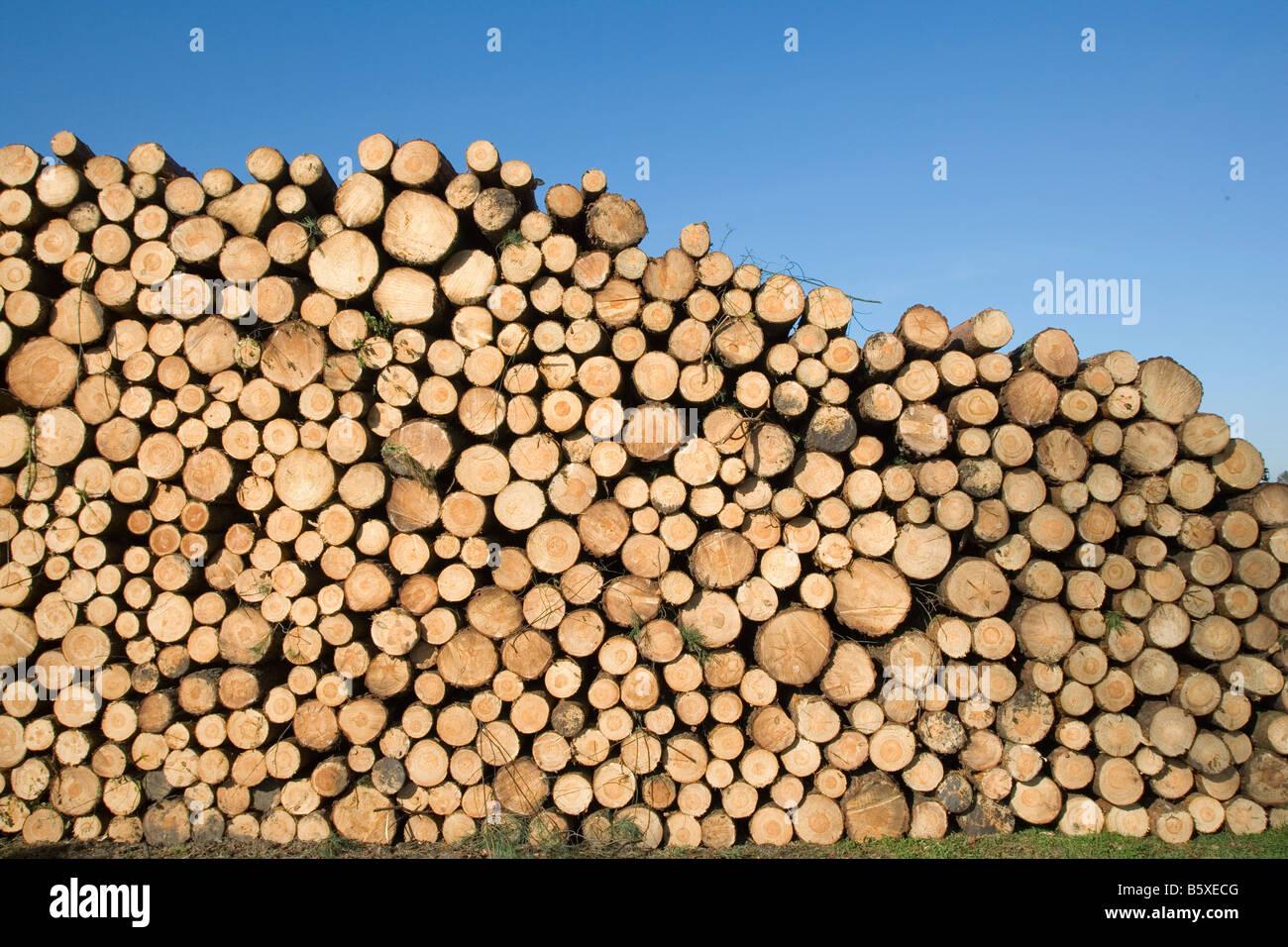 Pila di registri ad albero Immagini Stock