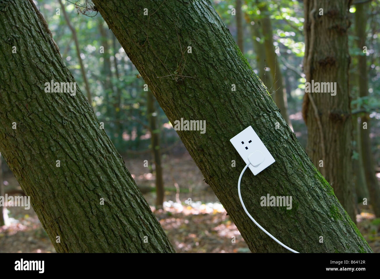 Presa elettrica su albero nella foresta Immagini Stock
