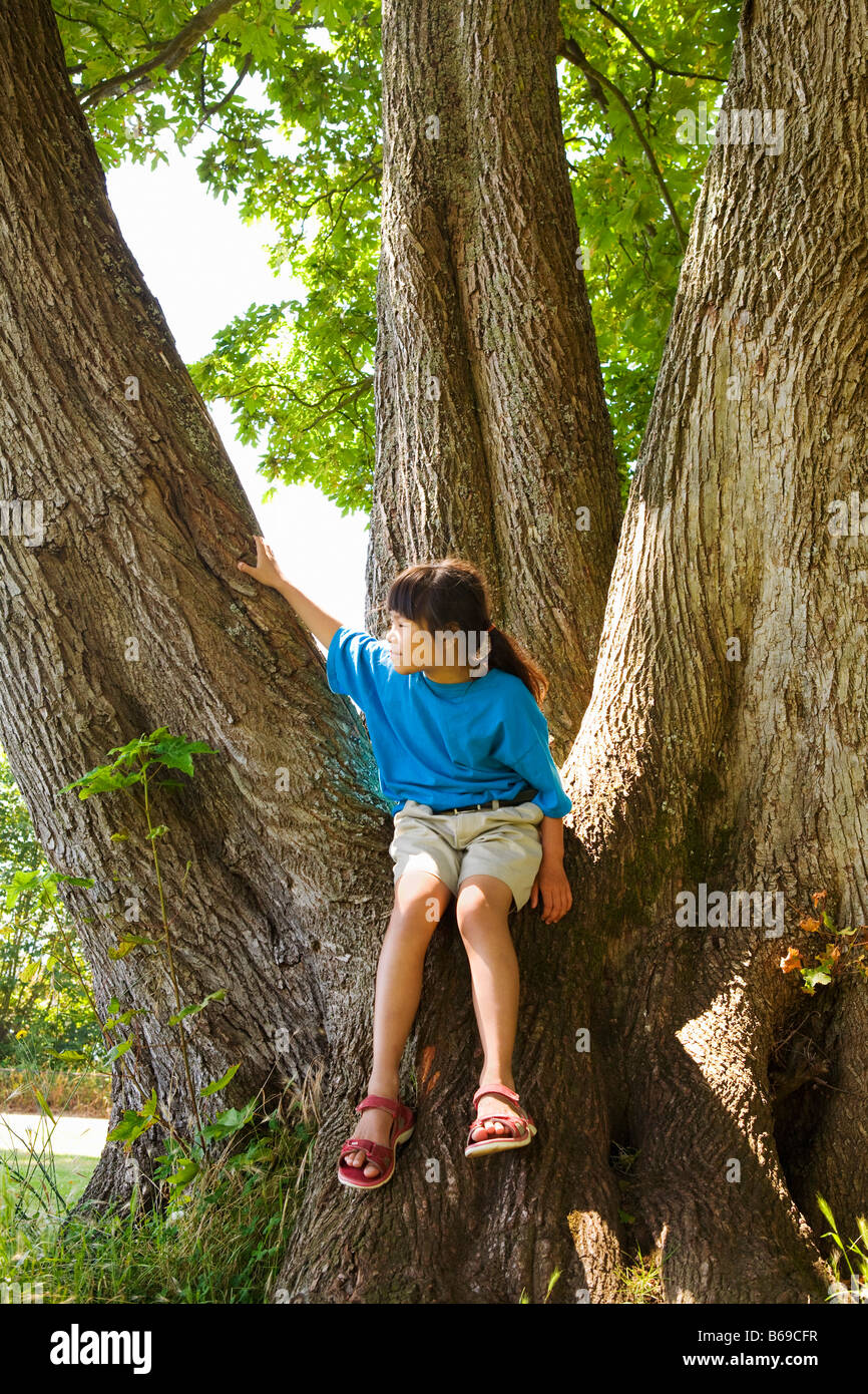 Ragazza seduta su una struttura ad albero Immagini Stock