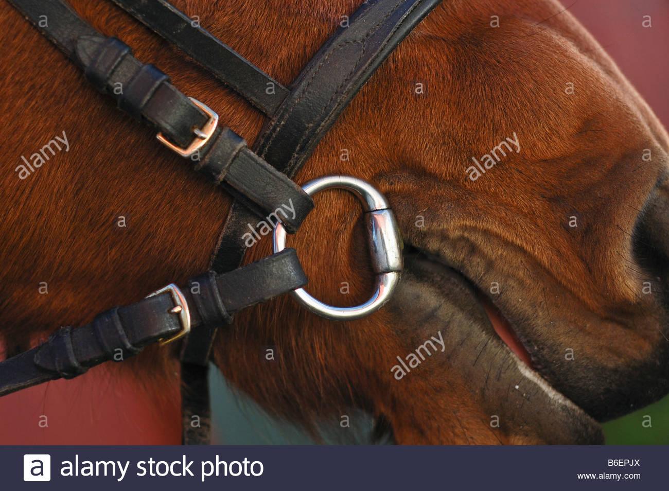 Freno del cavallo Immagini Stock