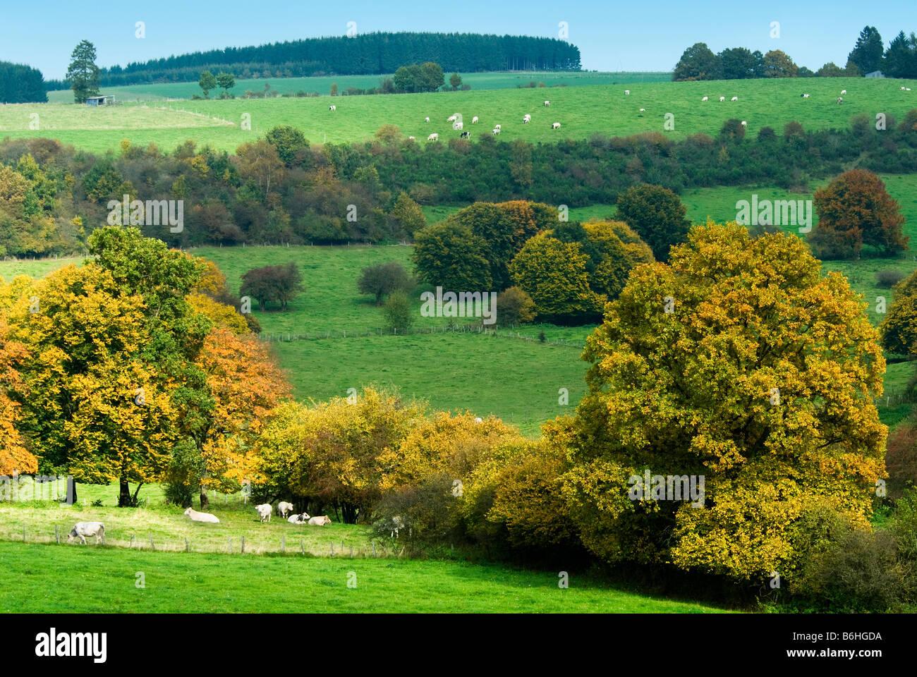 Autunno Magnifico Paesaggio Di Campagna In Belgio Ardenne Foto