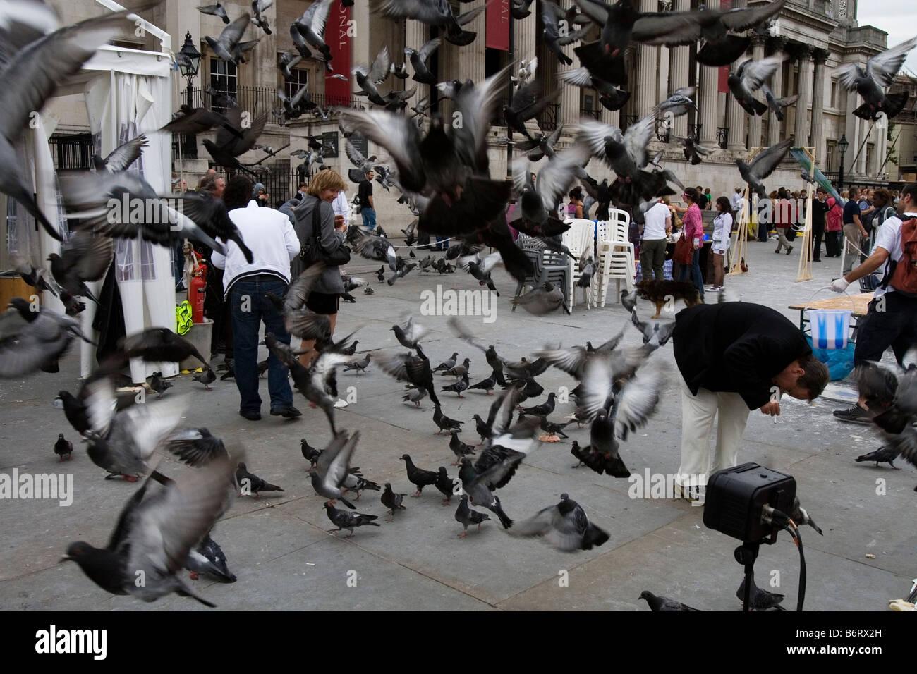 Piccioni in Trafalgar Square e prendere il volo. Immagini Stock