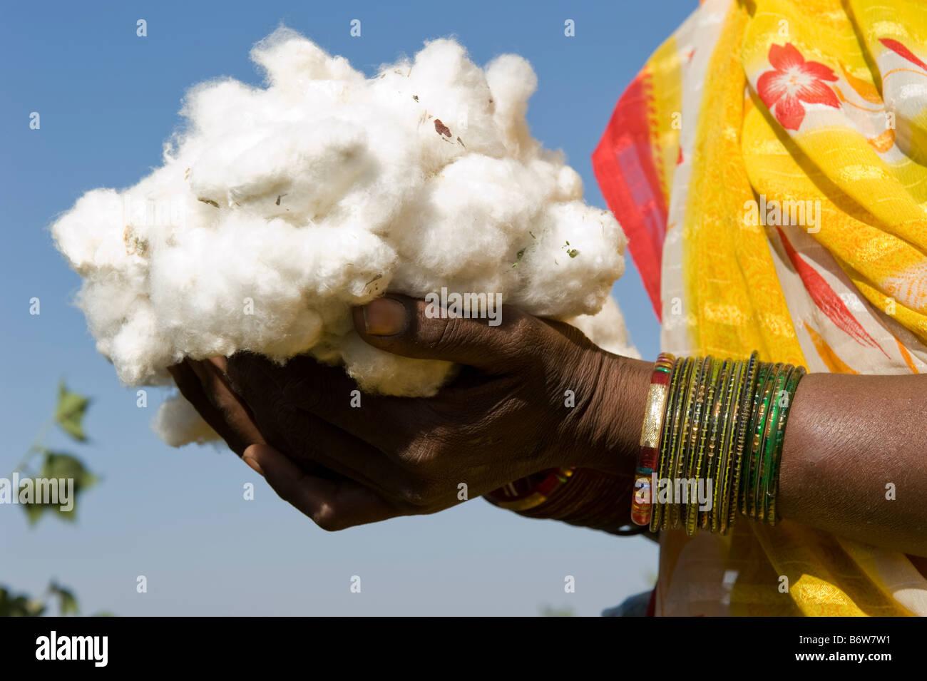 India p.f. Khargone , il commercio equo e solidale e di cotone biologico agricoltura Immagini Stock