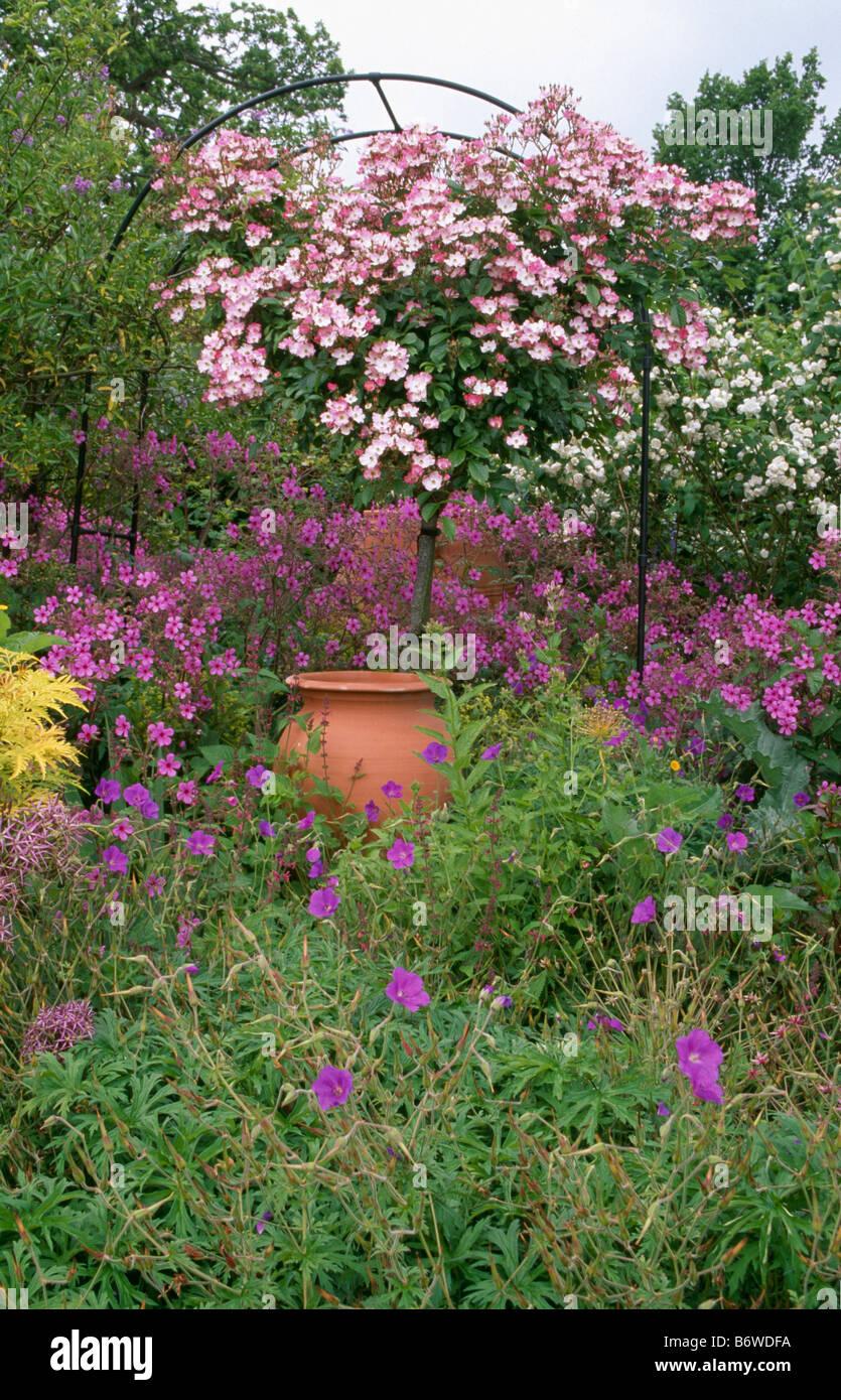 Rosa Rampicante In Vaso rosa rose rampicanti sull arco di metallo al di sopra di