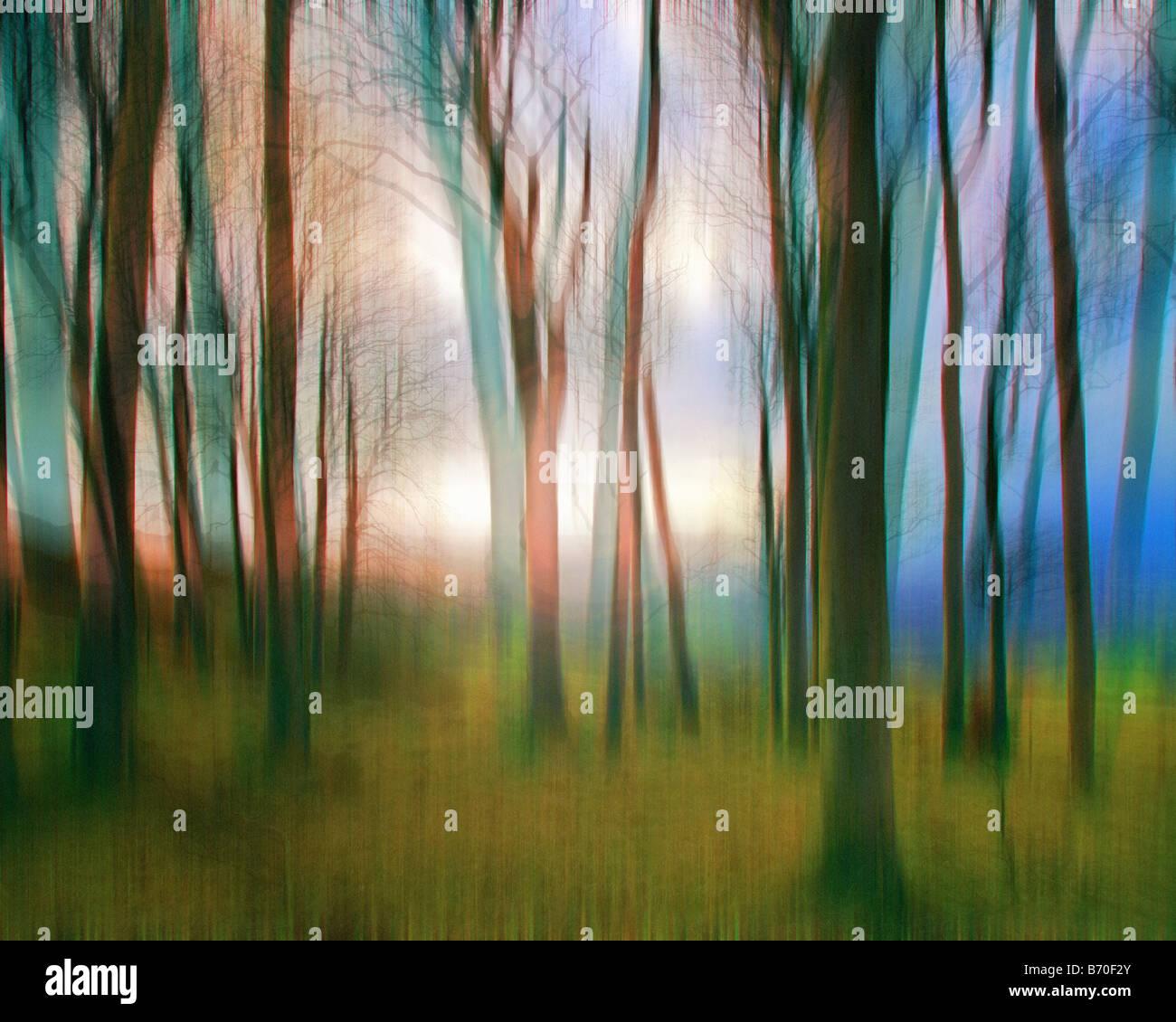 Arte: Magic Boschi Immagini Stock