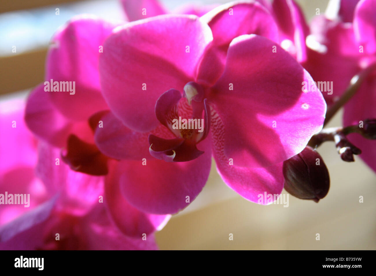 Orchidee rosa immagini orchidee rosa fotos stock alamy