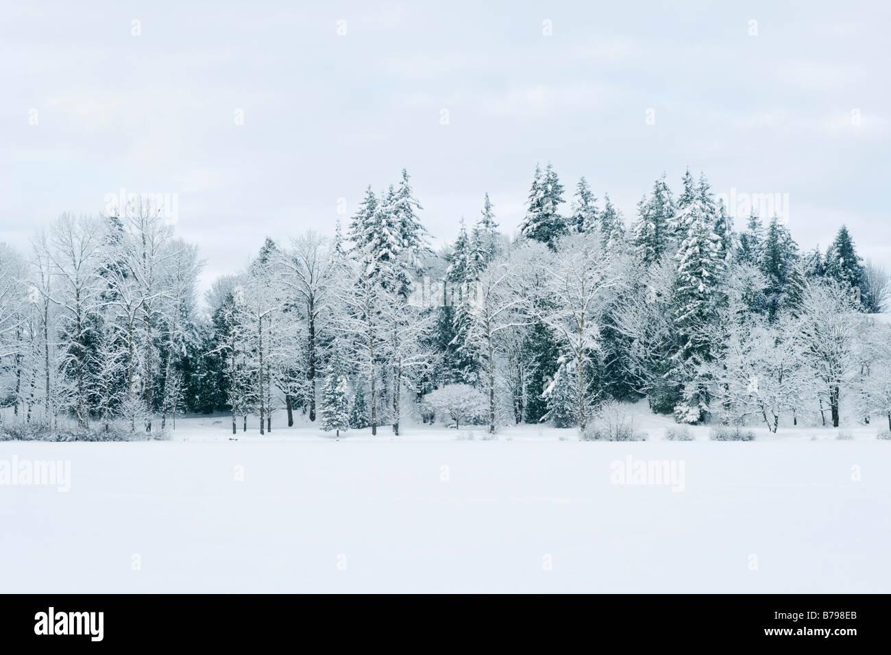 Coperte di neve linea di alberi Lago mulino in Abbotsford BC Canada Immagini Stock