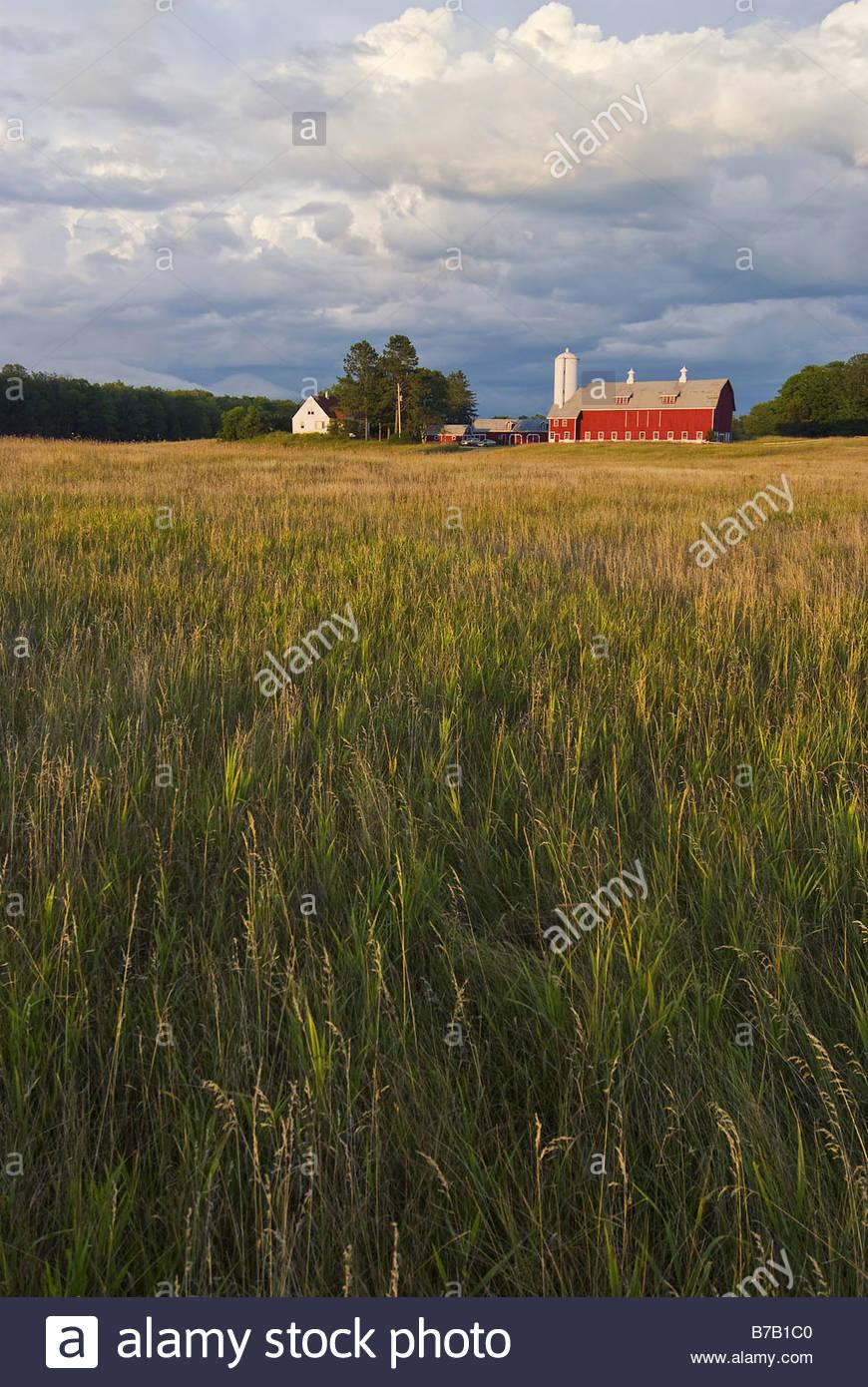 Campo di grano con la fattoria di distanza Immagini Stock