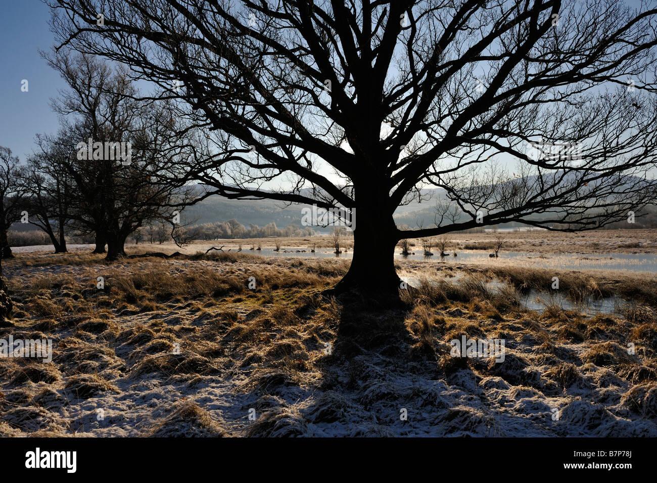 Struttura retroilluminata in corrispondenza del bordo di acqua congelata prati vicino a Killin Perthshire Scozia Immagini Stock