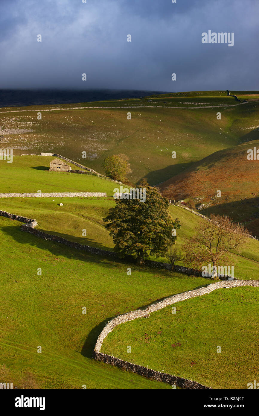I muri di pietra e fienili nr Kettlewell, Wharfedale, Yorkshire Dales National Park, England, Regno Unito Foto Stock