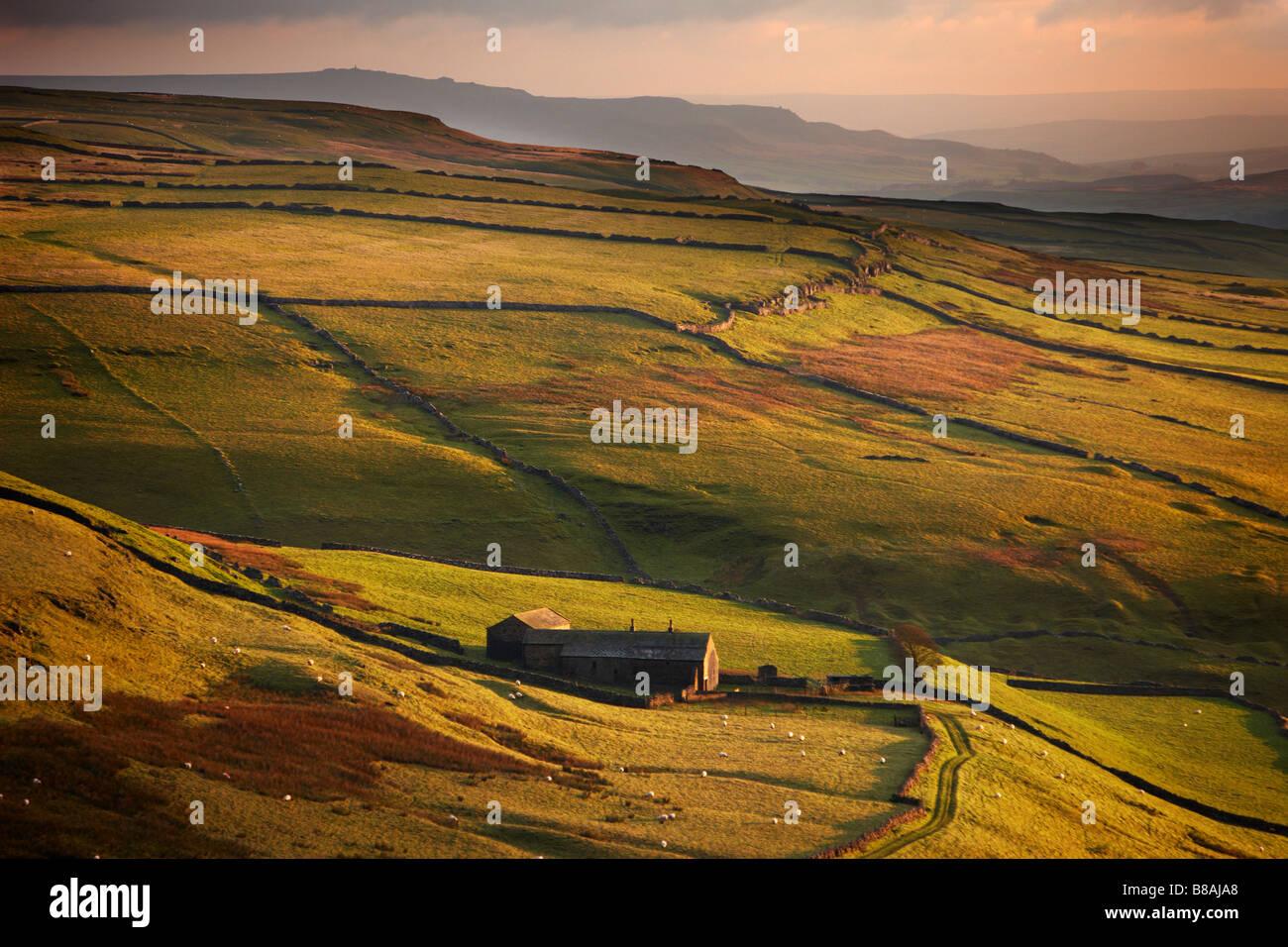 Luce della sera sui muri in pietra e le aziende agricole di Wharfedale, nr Kettlewell, Yorkshire Dales National Immagini Stock