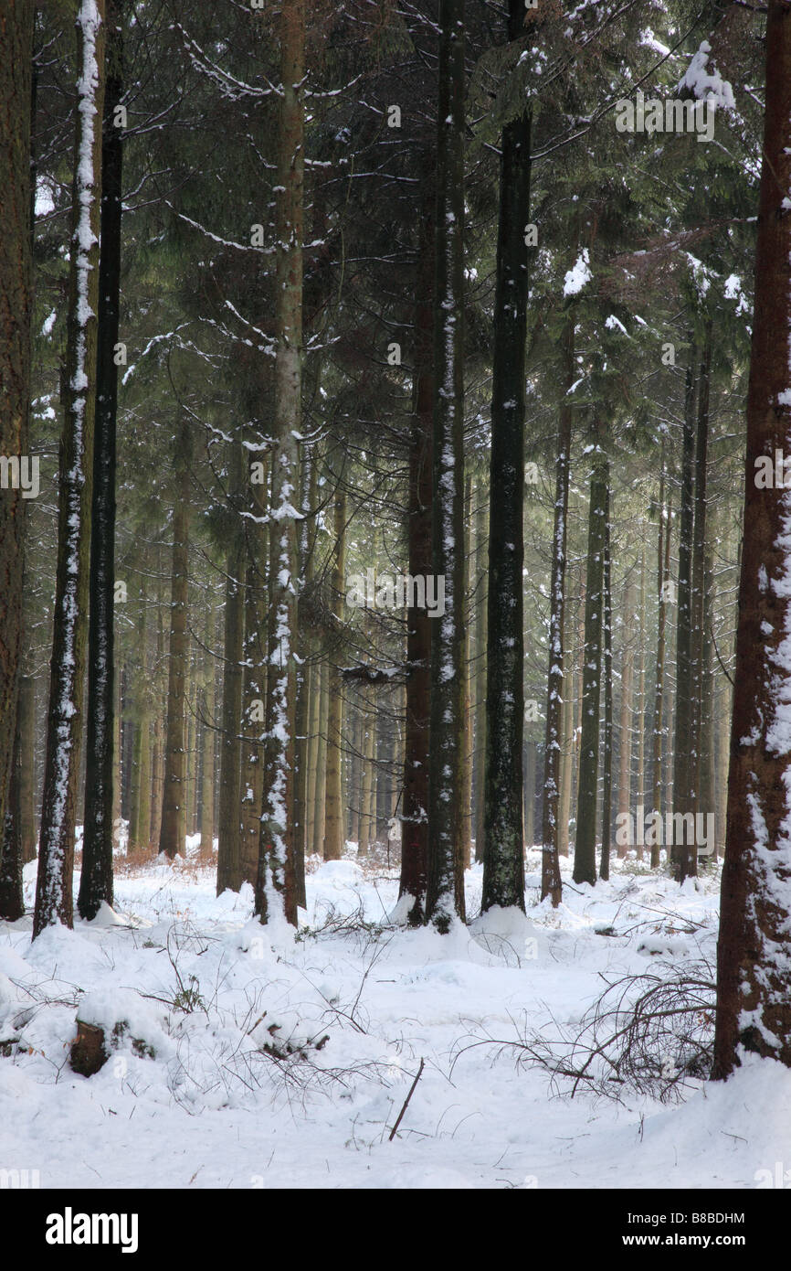 Neve a cielo Gate, Longleat Estate, Wiltshire, Inghilterra Immagini Stock