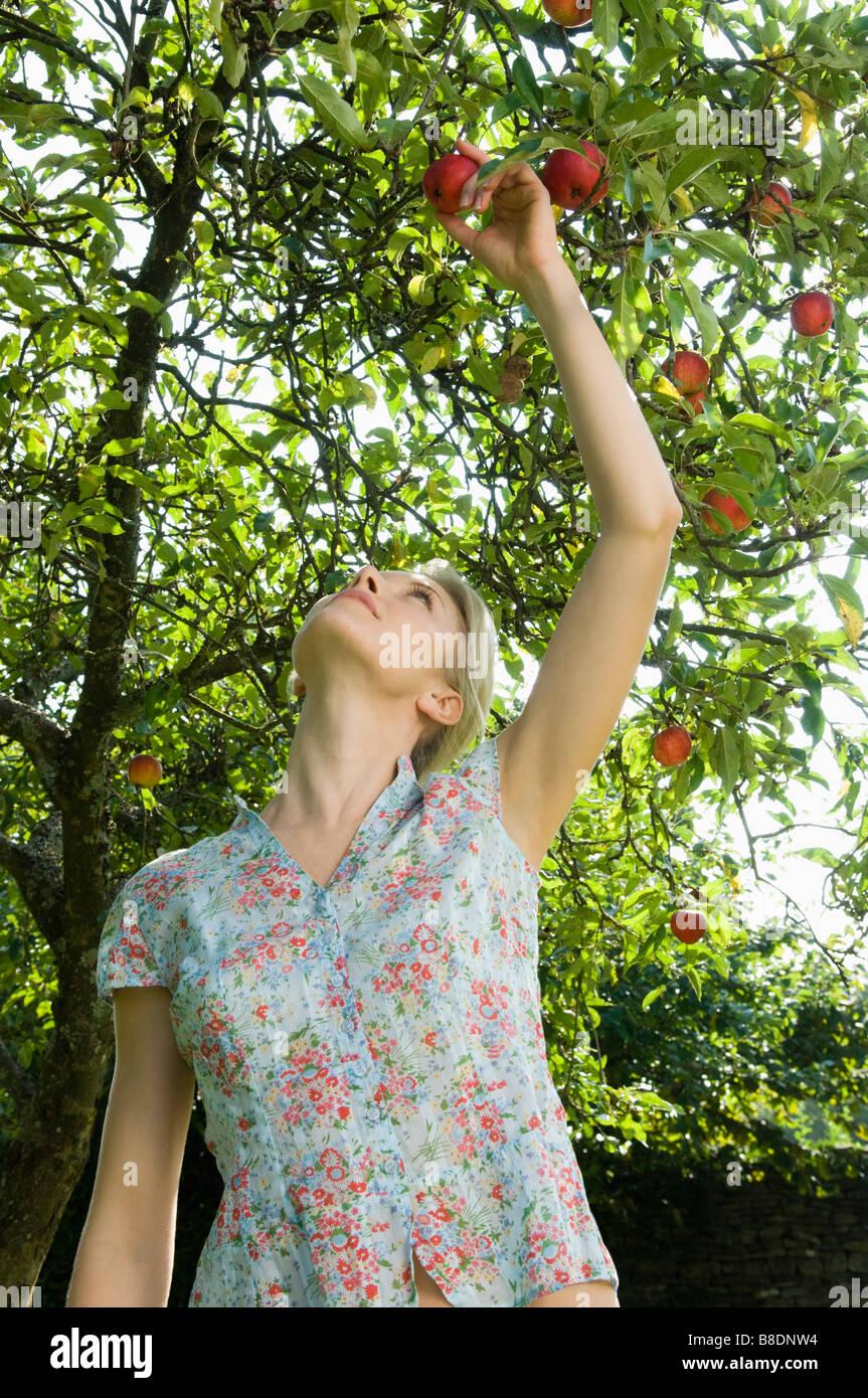 Donna e albero della mela Immagini Stock
