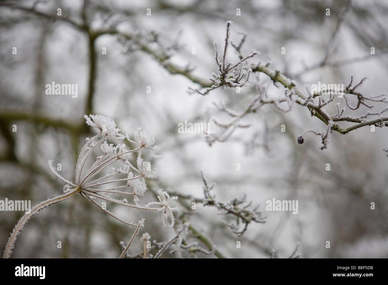 Inverno da sogno in scena con i dettagli delle piante coperto di brina Immagini Stock