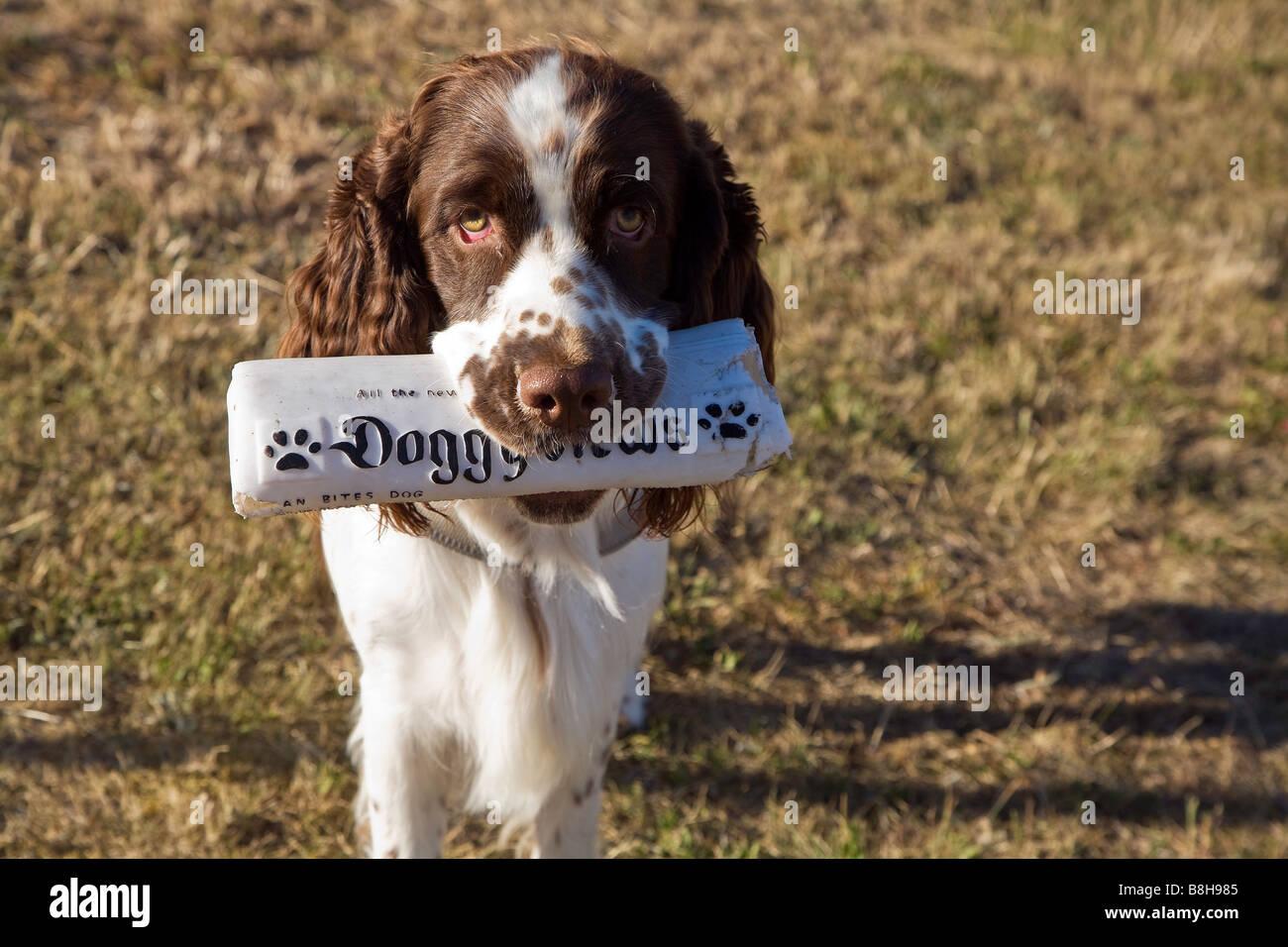 Doggy News newpaper per cani Immagini Stock