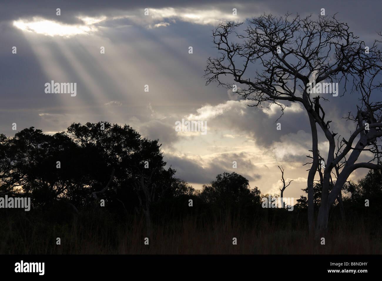 Alberi stagliano contro un cielo nuvoloso con i raggi del sole che splende attraverso Immagini Stock