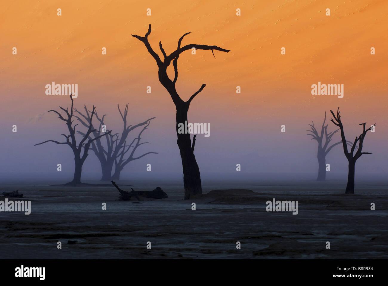 Gli alberi morti nell'Deadvlei, Namibia Immagini Stock