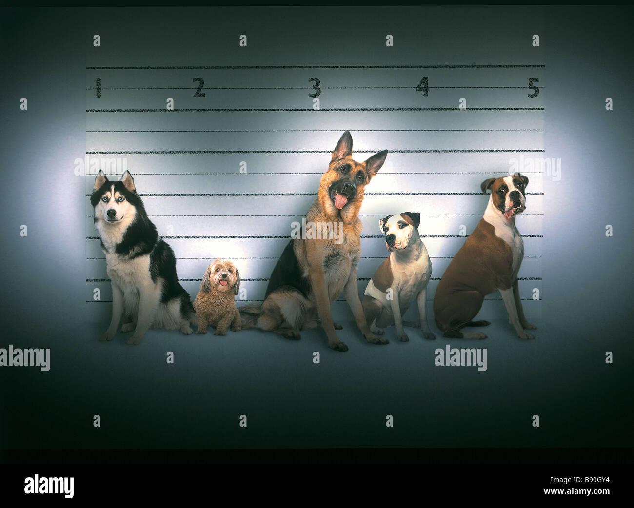 FL3053, KITCHIN/HURST penale line-up bad cani Immagini Stock