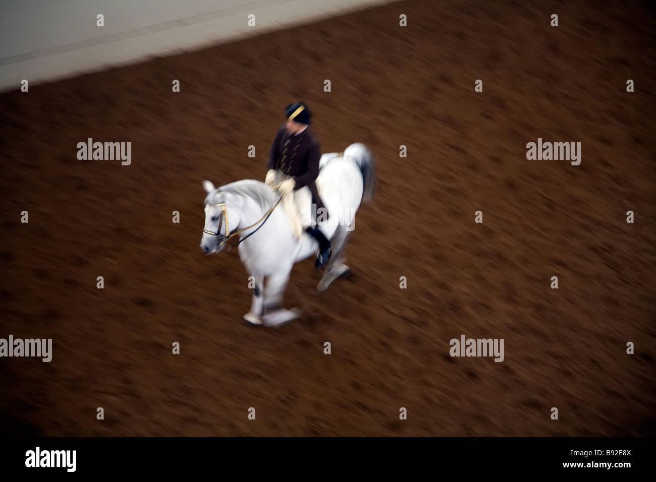 Rehersal Sessione della Scuola di Equitazione Spagnola Spanische Reitschule a Vienna Austria Immagini Stock