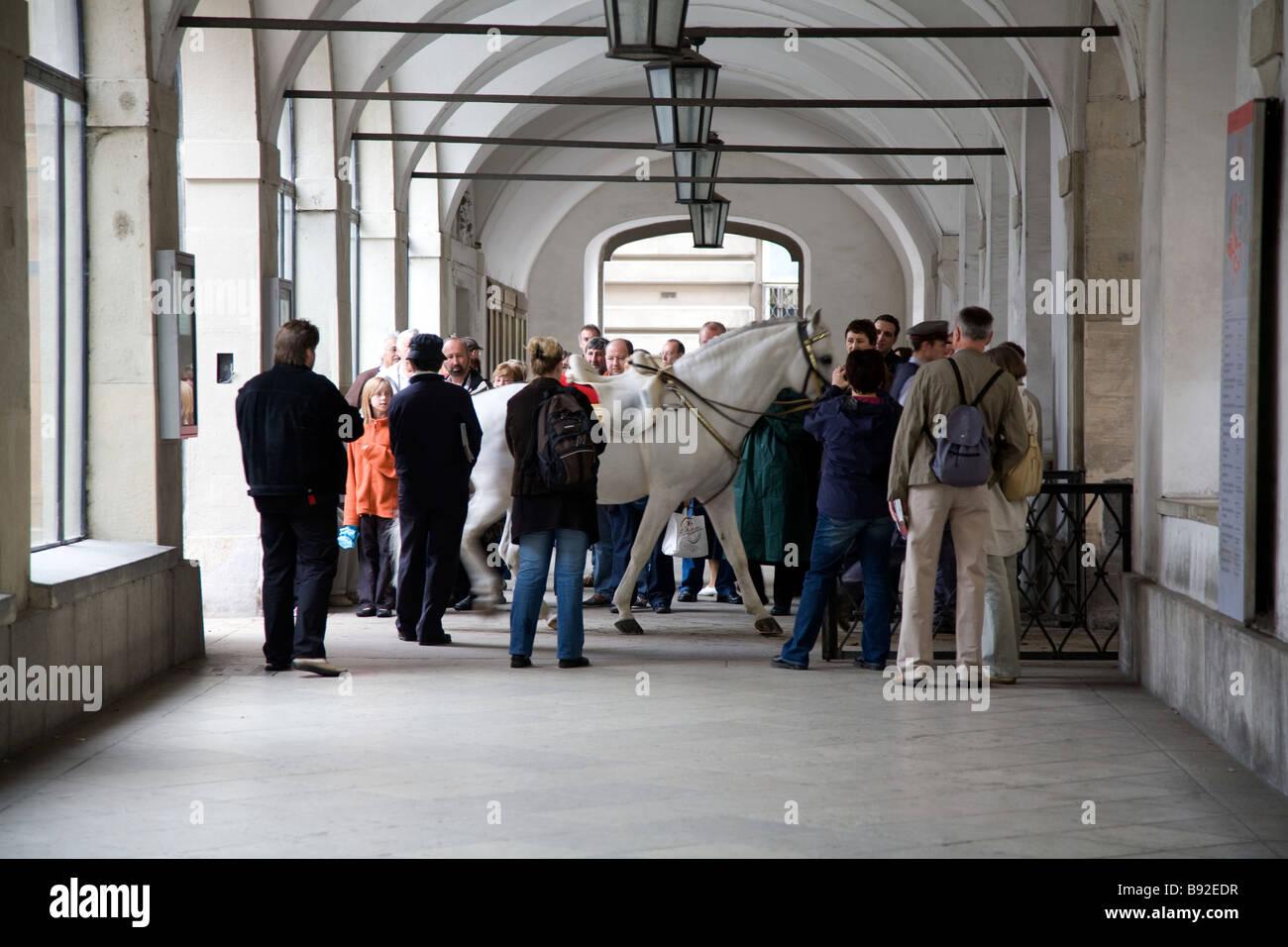 Cavalli in piombo per le prestazioni presso la Scuola di Equitazione Spagnola Spanische Reitschule Vienna Austria Immagini Stock