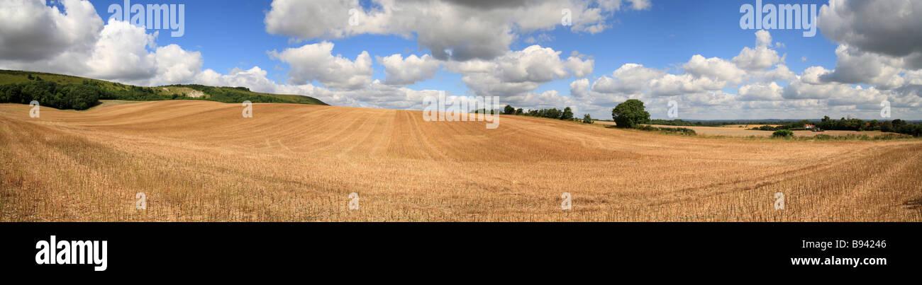 Stoppie di frumento, recentemente raccolte campo in East Sussex, guardando verso il South Downs. Immagini Stock